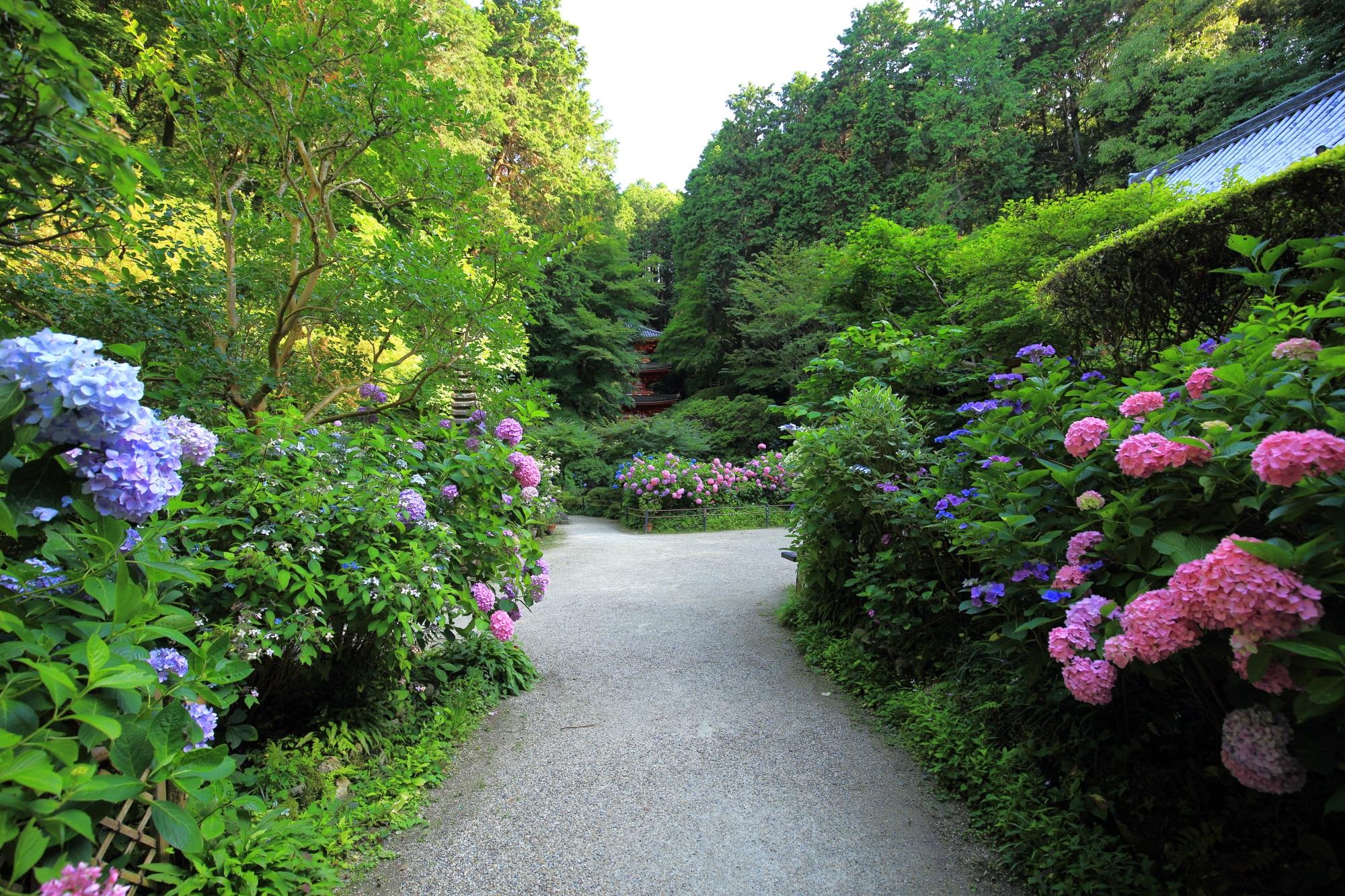いきなり紫陽花がお出迎えする岩船寺(がんせんじ)の落ち着いた雰囲気の境内