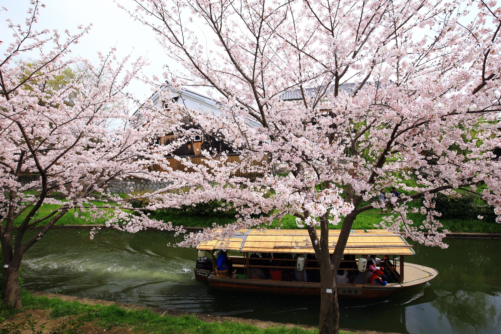 満開の桜の下を通る遊覧の十石船