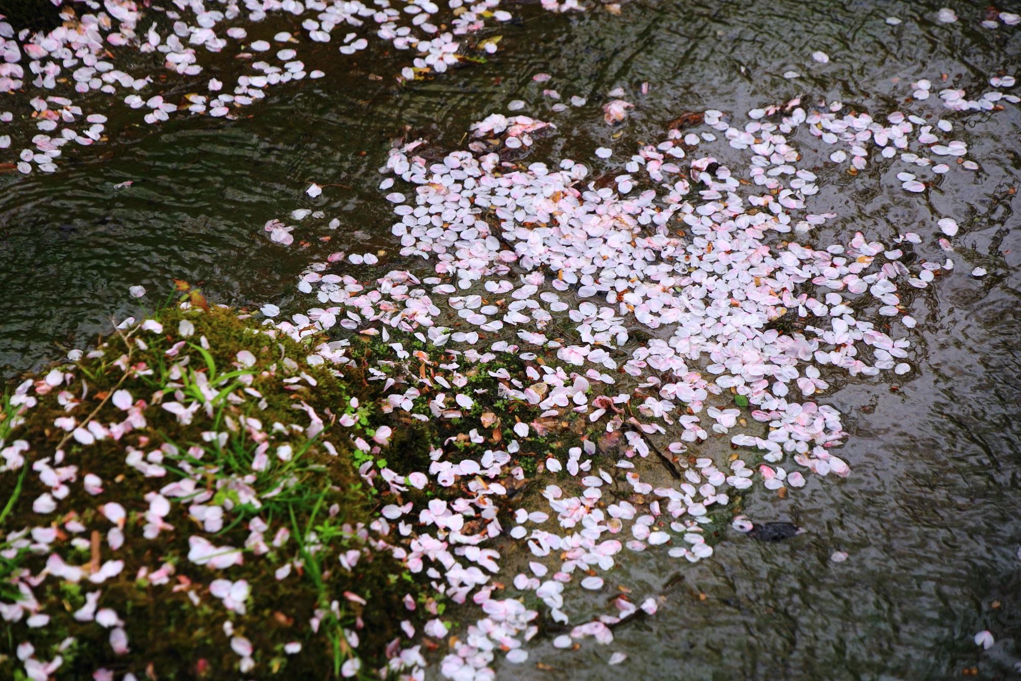 水面を彩る美しい桜の花びら