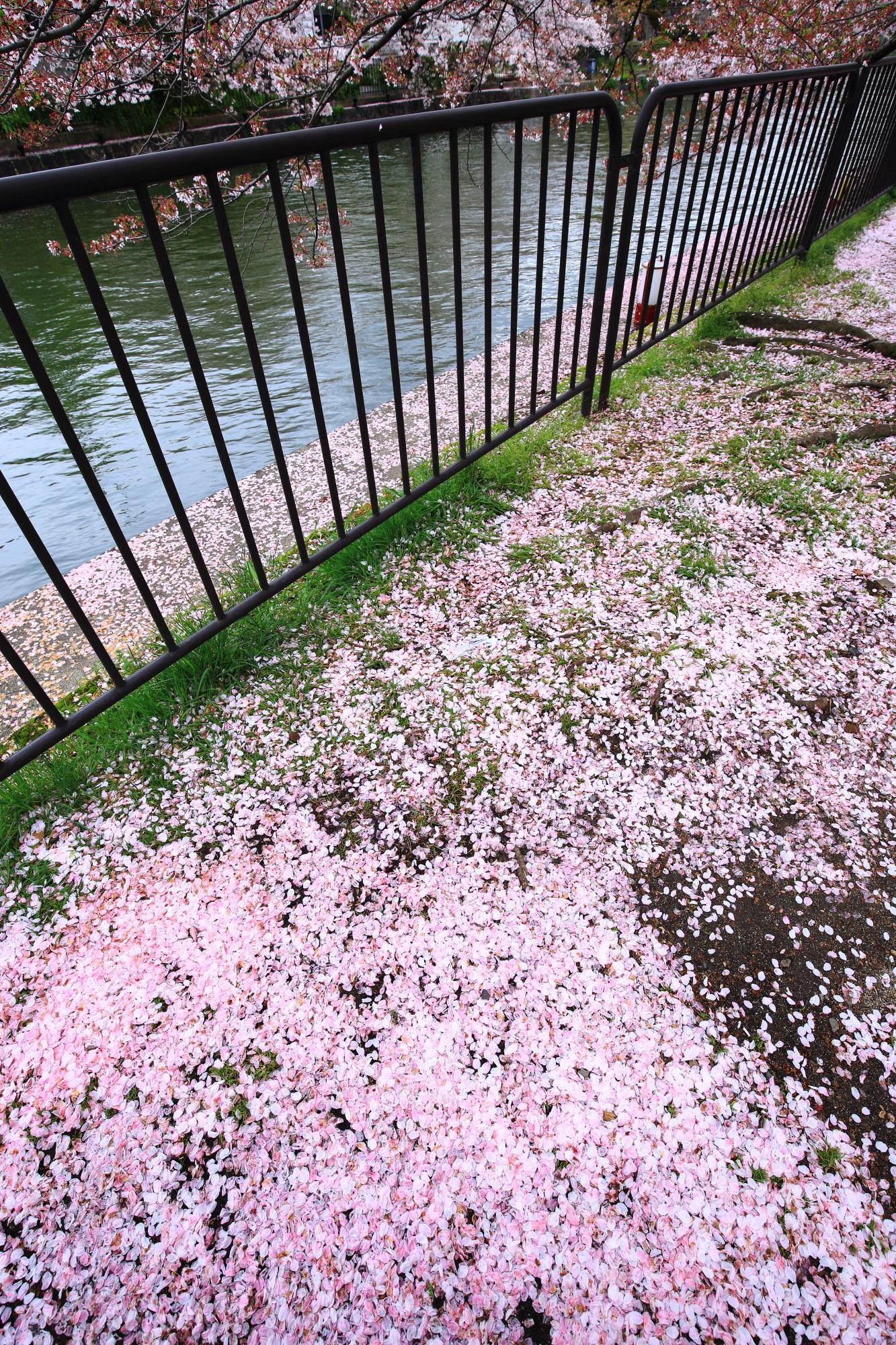 でもやっぱり極上の散り桜