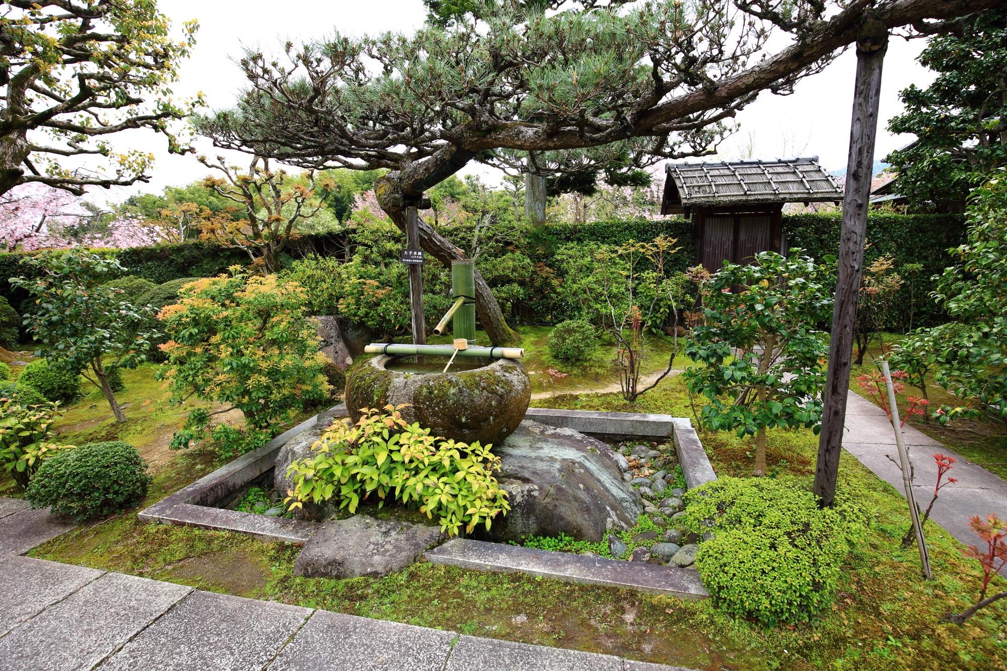 正法寺の本堂前の庭園