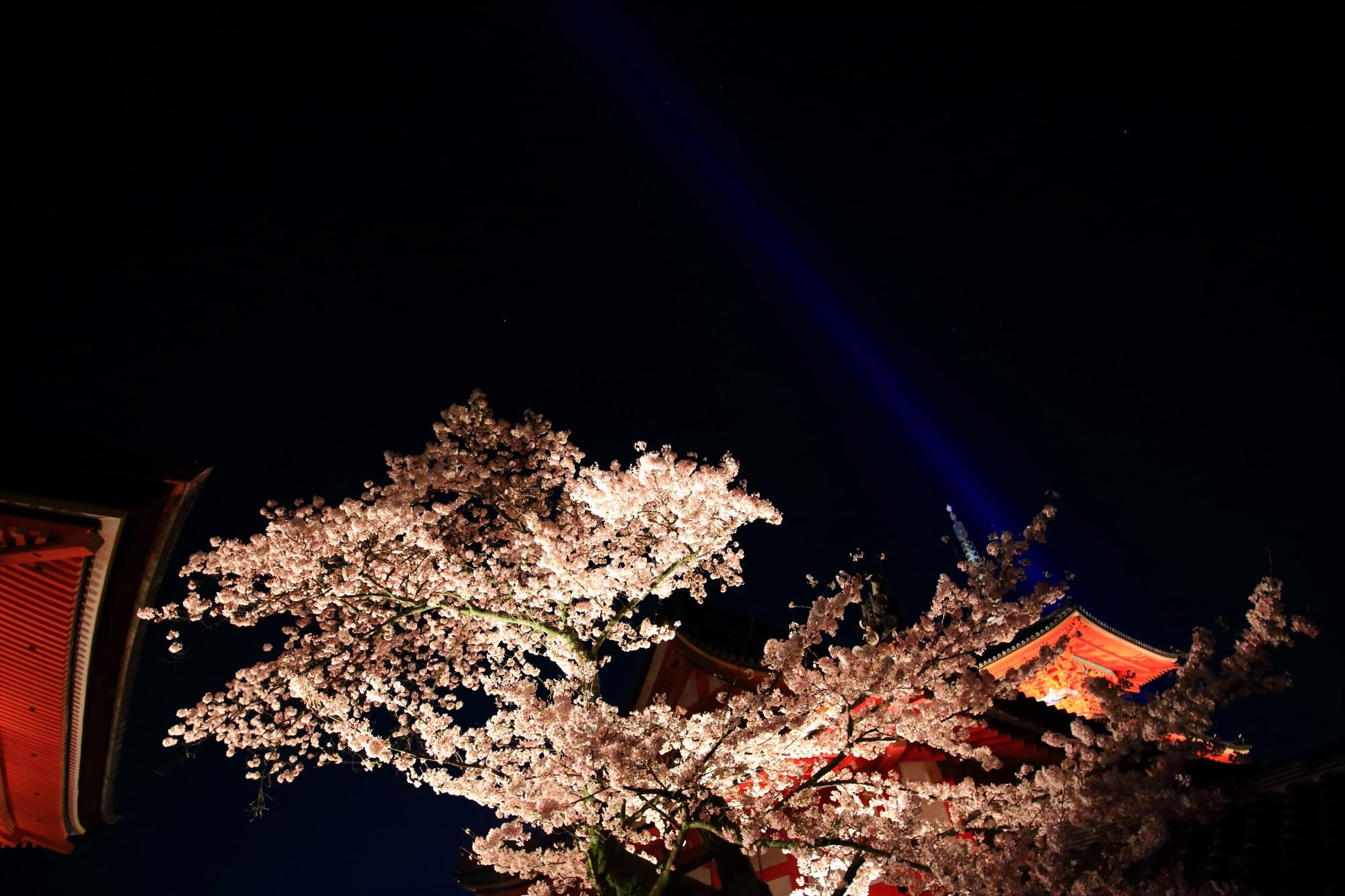 鮮やかな三重塔と夜空を彩る満開の夜桜