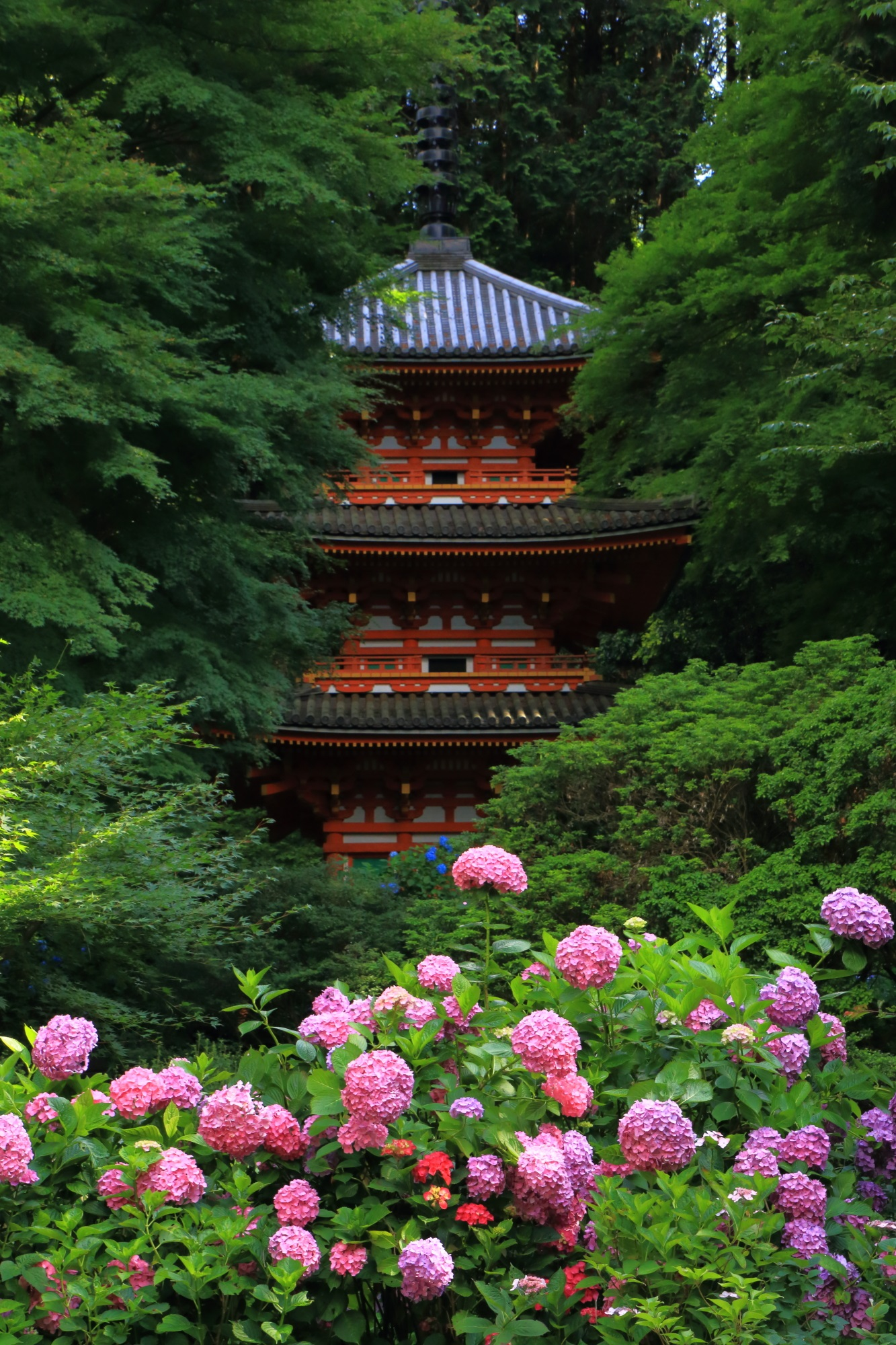 見方によって紫陽花が主にも三重塔が主にもなる岩船寺