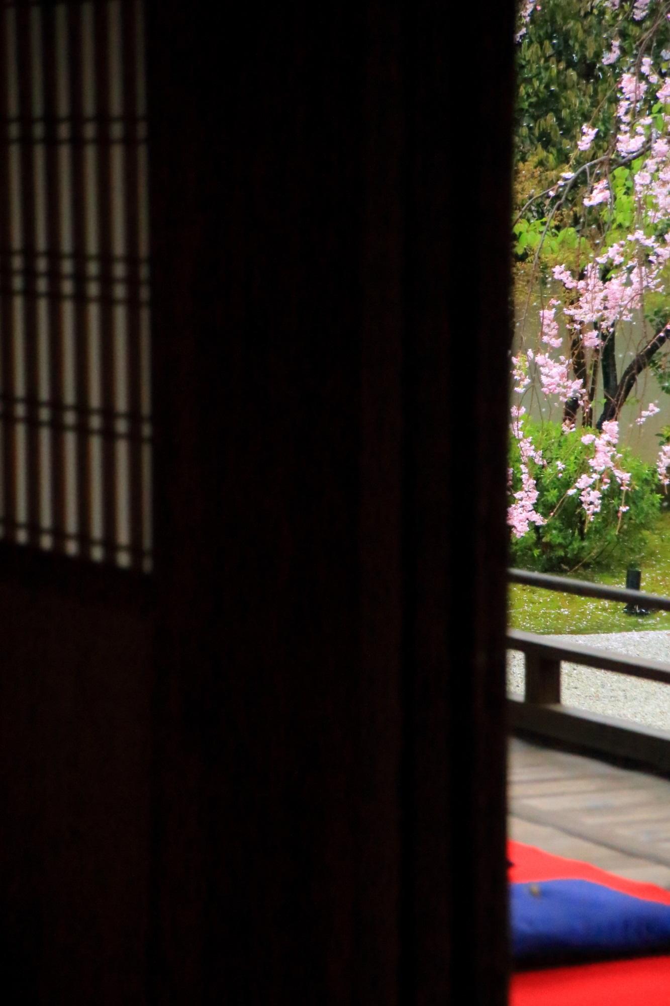 桜の穴場の正伝永源院のしだれ桜