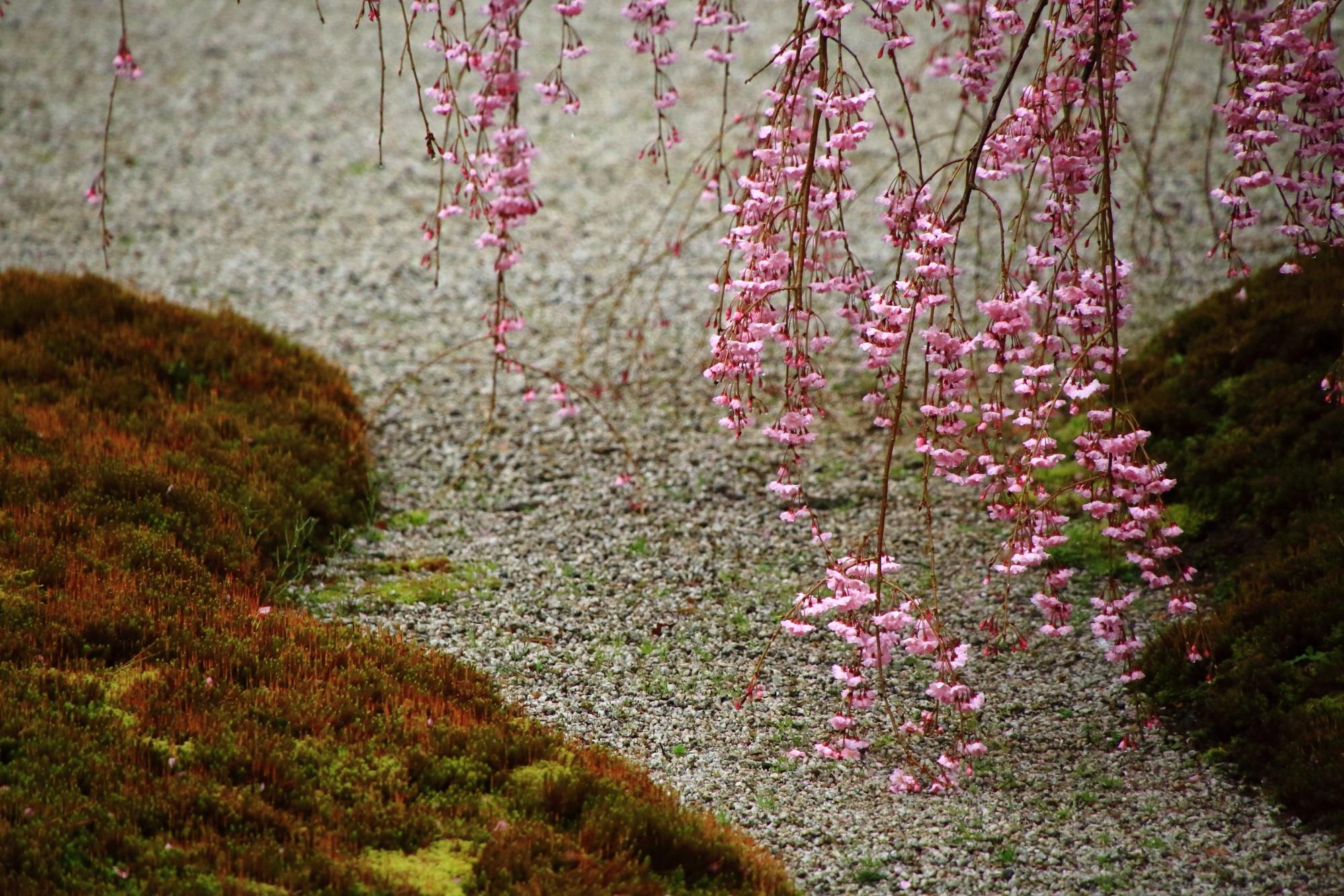 雨に濡れてなびく繊細で可憐な花が