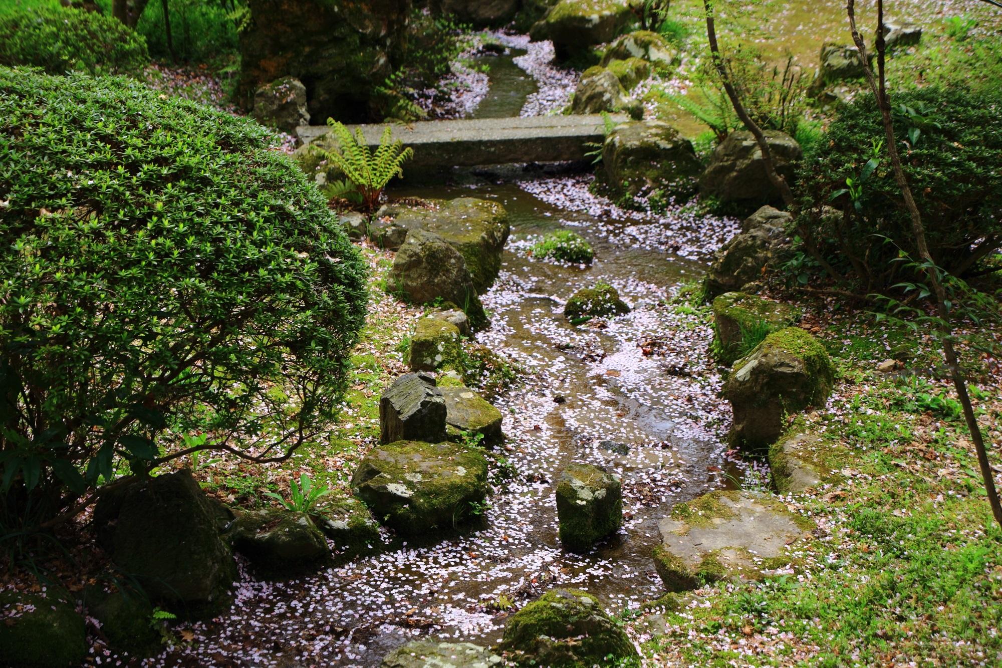花びらで春色に彩られた綺麗な小川