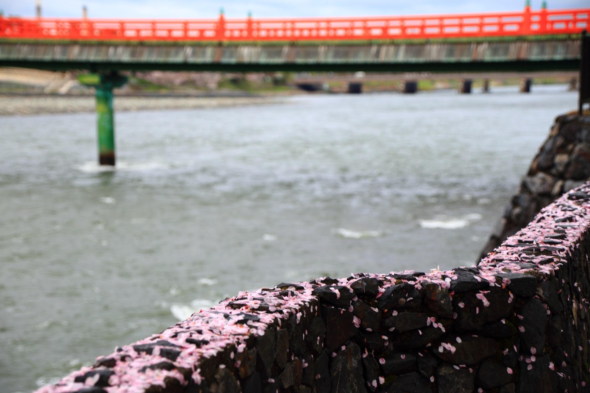朝霧橋と見事なピンクの散り桜