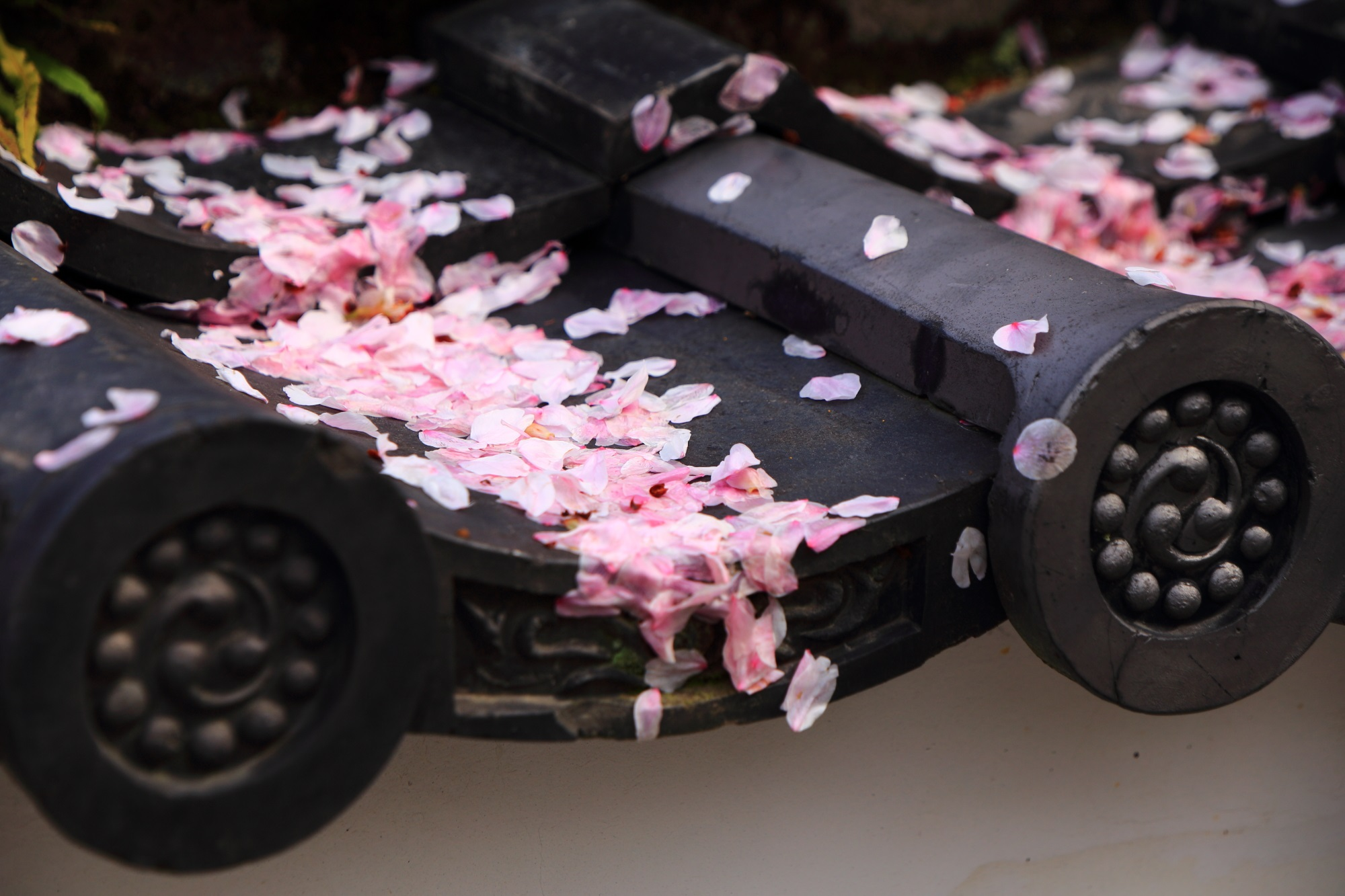 美しい春色のピンクの花びら