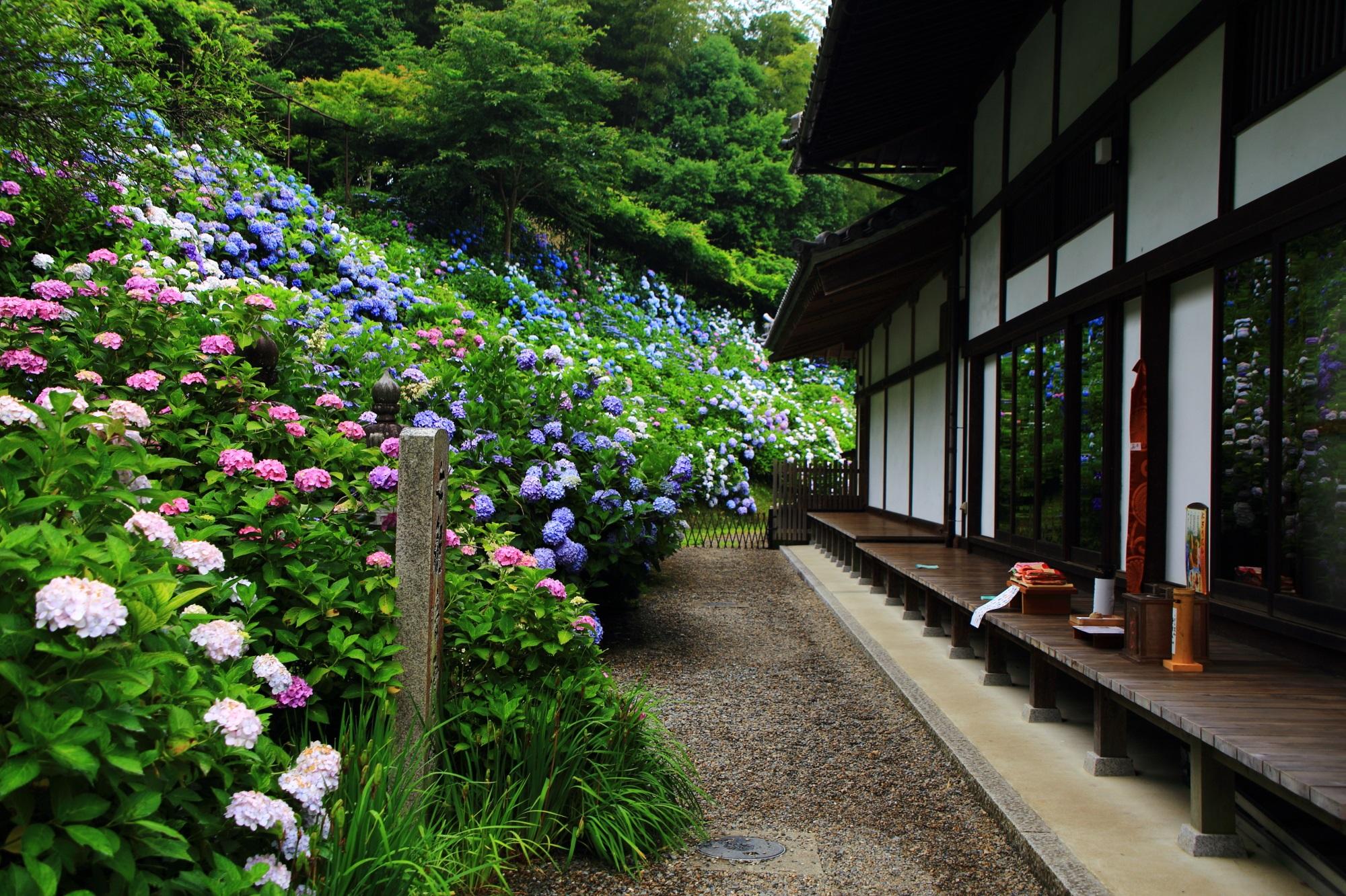 丹波あじさい寺の絵になる静かな紫陽花の風景