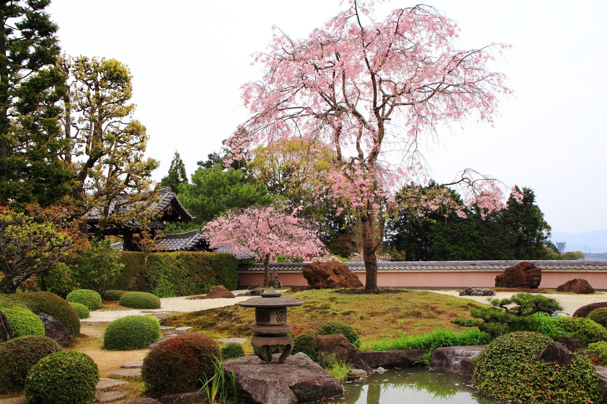 高画質 しだれ桜 宝生苑 画像