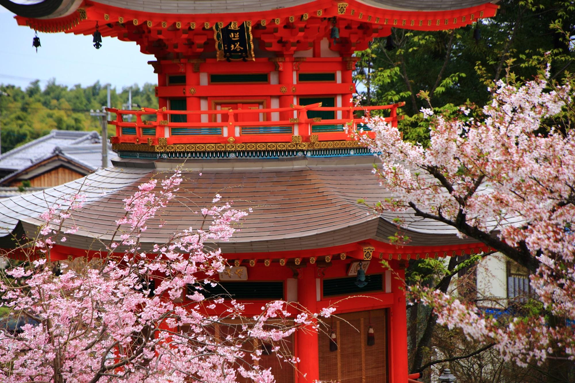 多様な桜につつまれた遍照塔