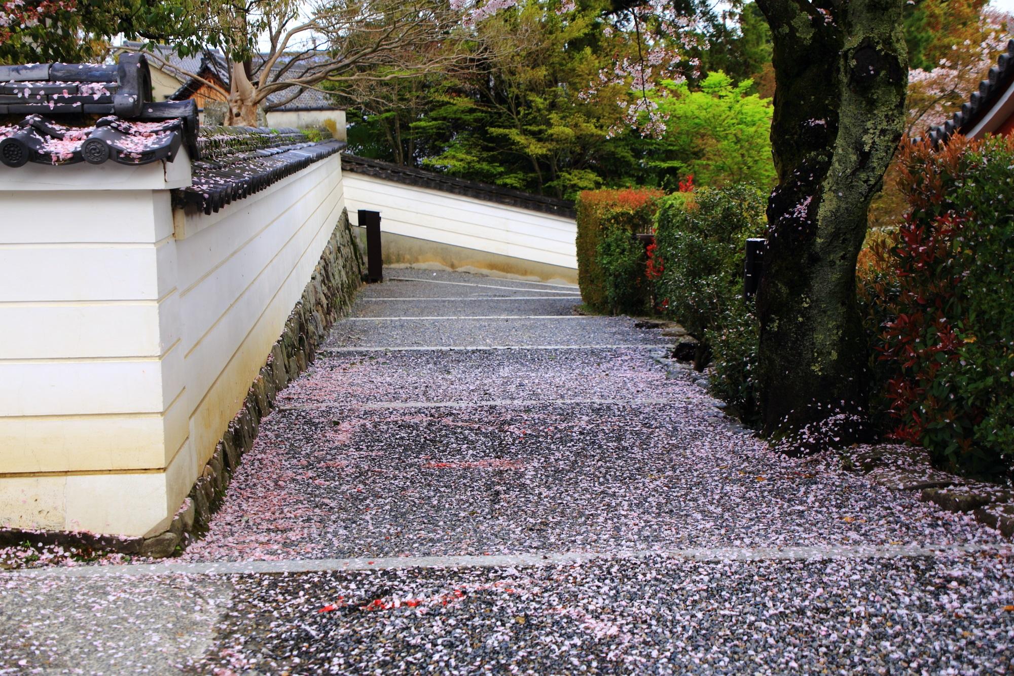 華やかな散り桜につつまれた鳳凰堂の裏