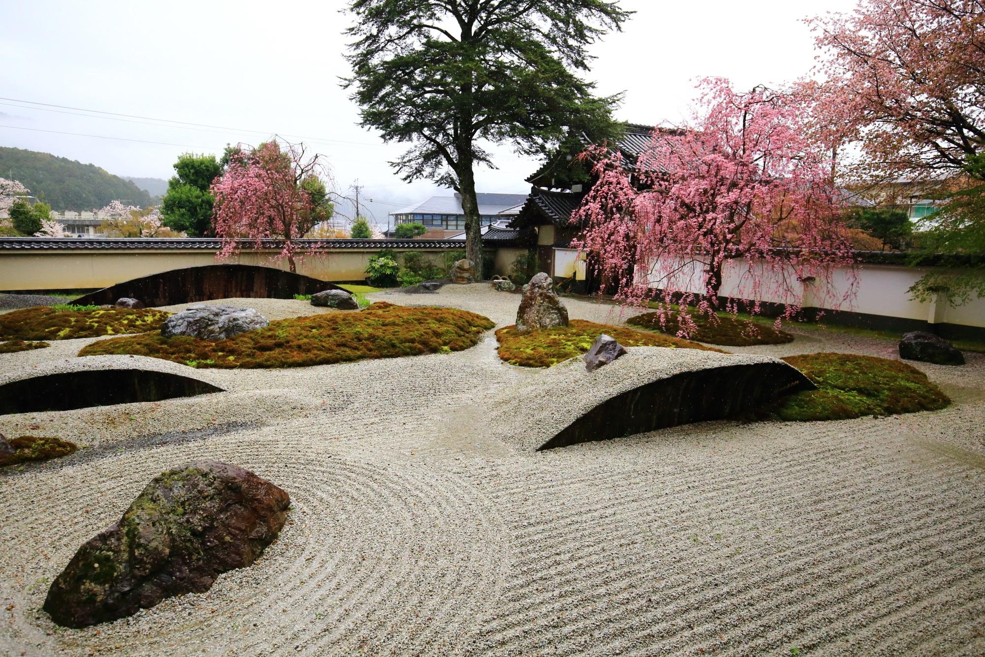 しだれ桜の咲く実相院の石庭
