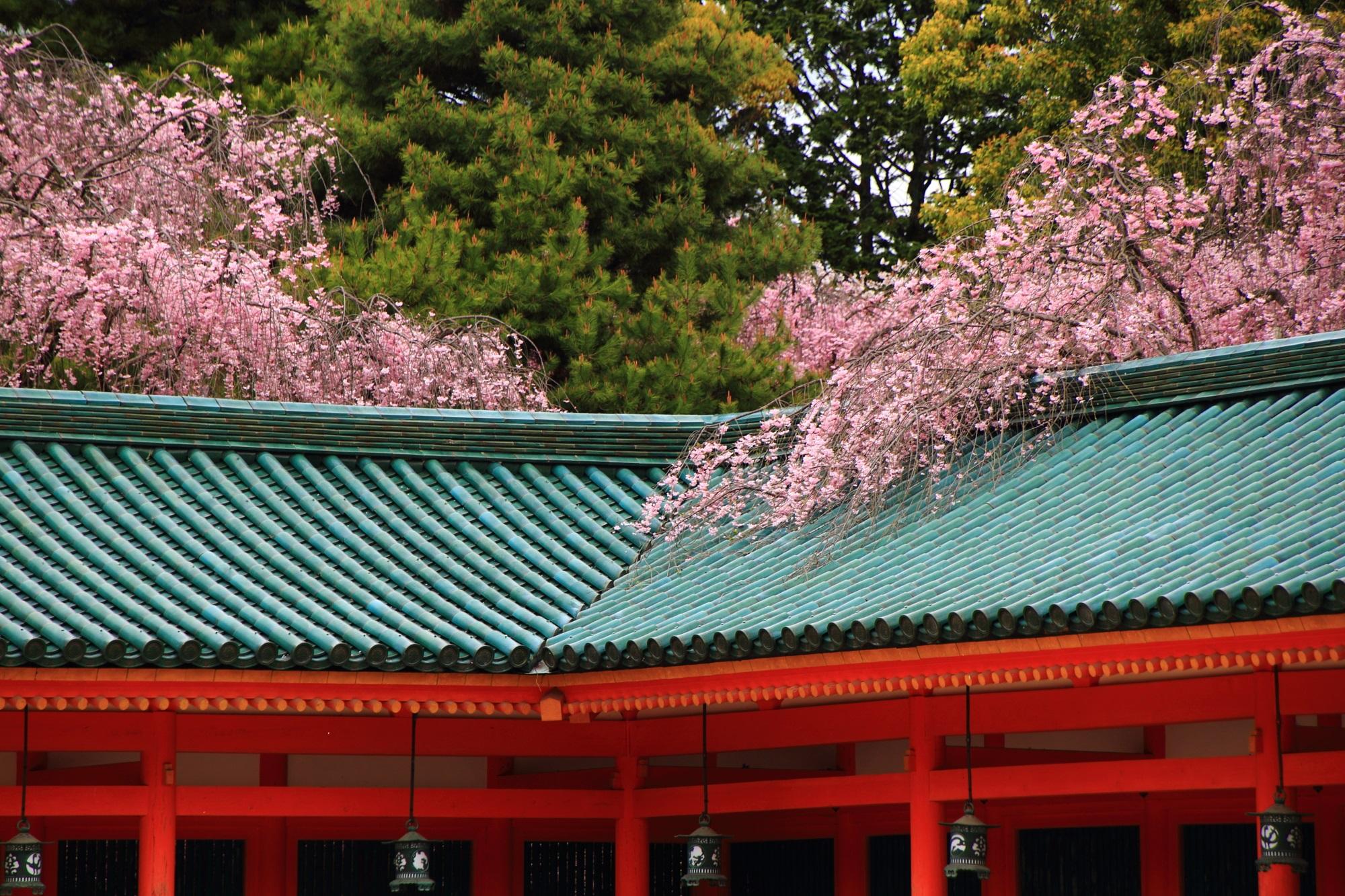 平安神宮の屋根にかかるしだれ桜