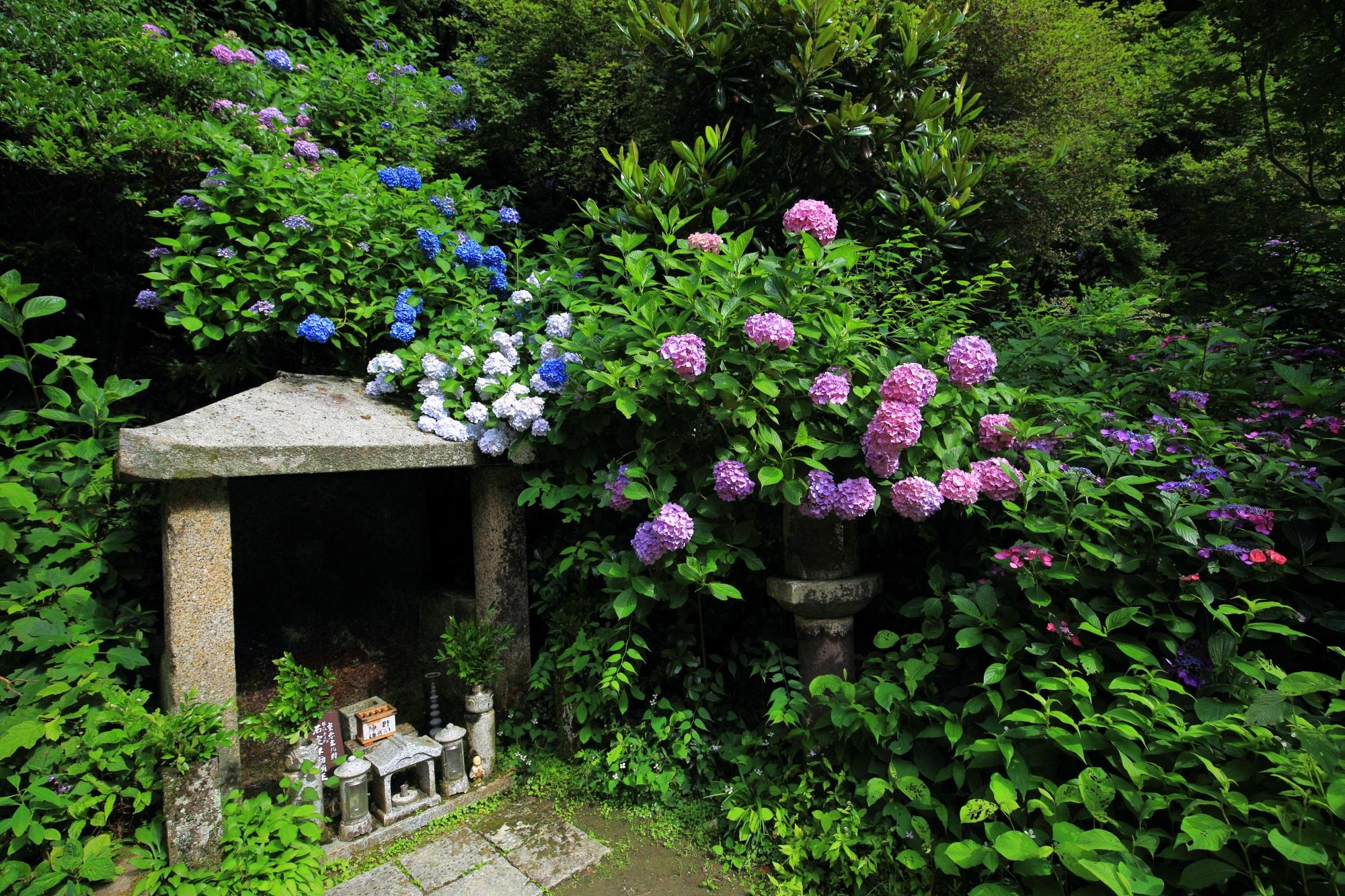 絵になる初夏の風景の石室不動明王立像と紫陽花