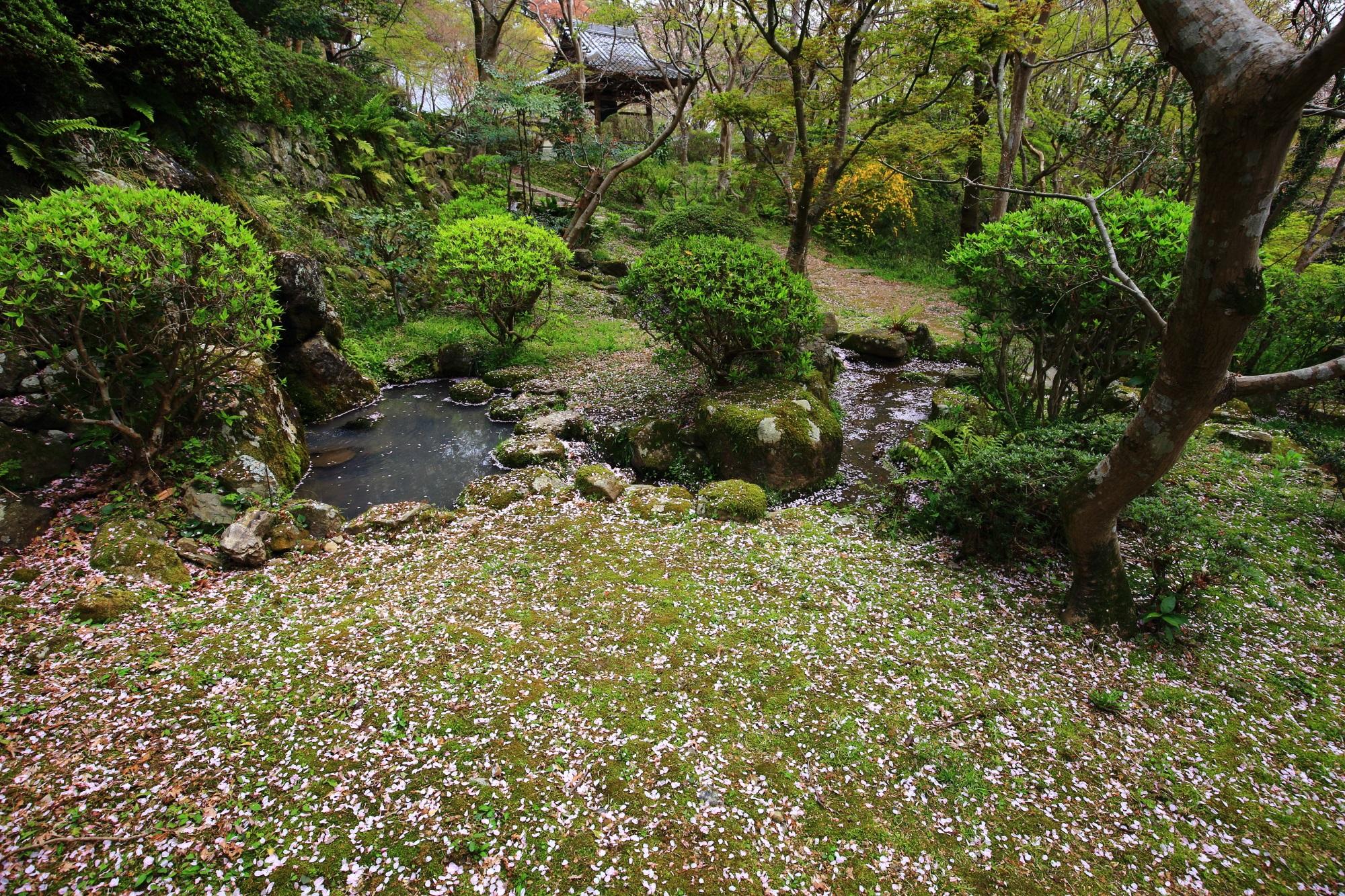 冴野の沼へ流れる「三春川」周辺の散り桜