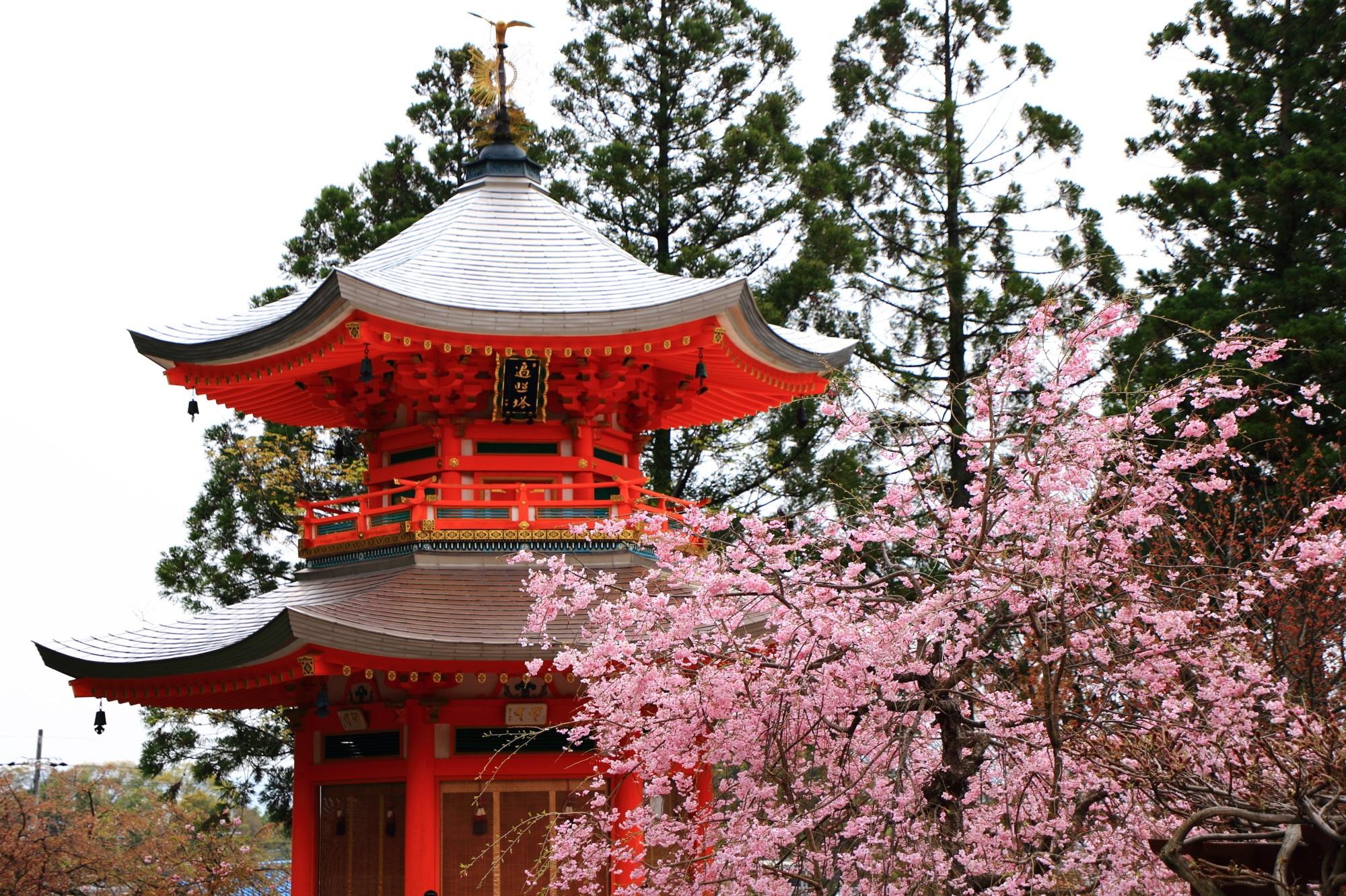 満開のしだれ桜に彩られた上品な遍照塔