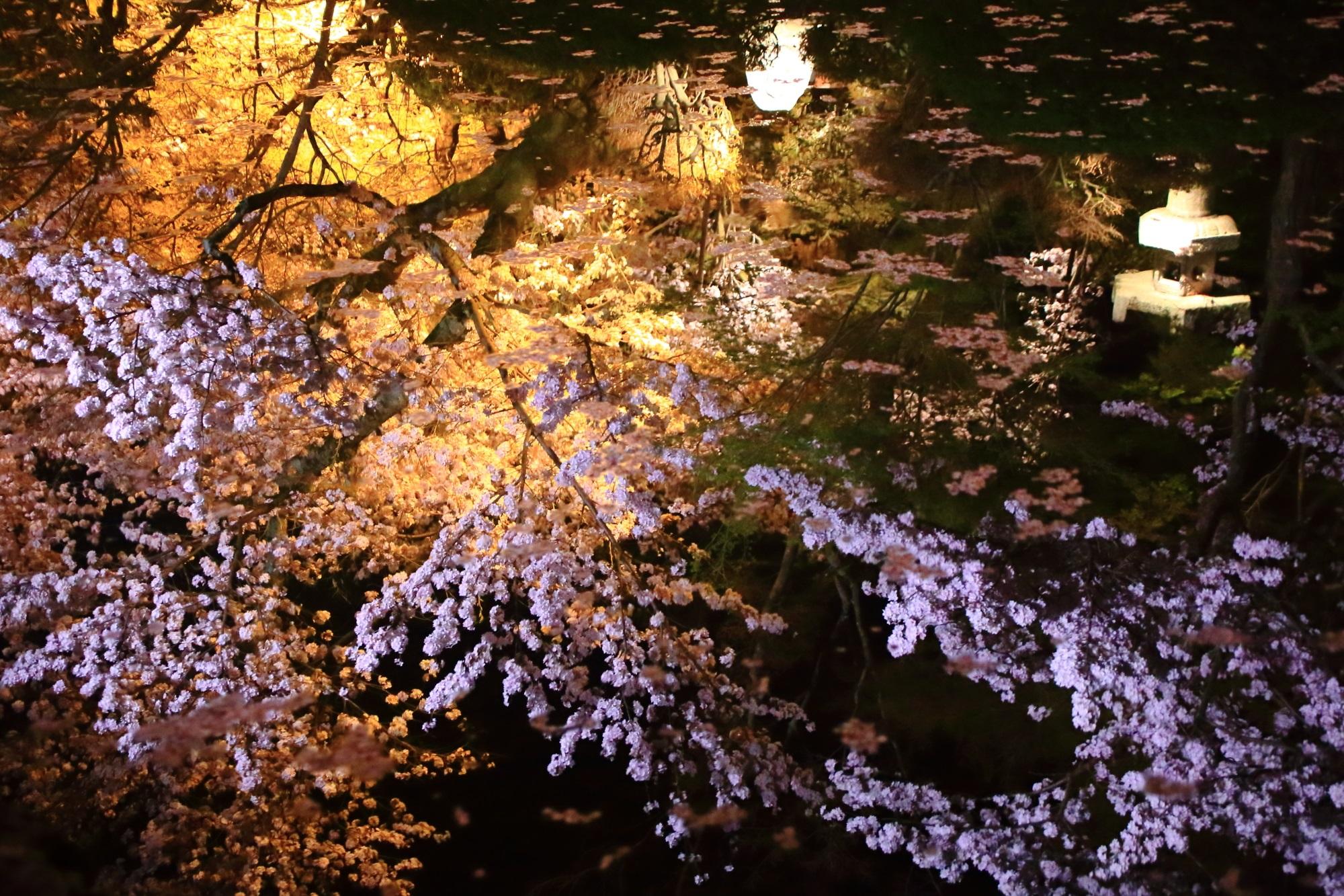 水の中で夢のように咲き誇る夜桜