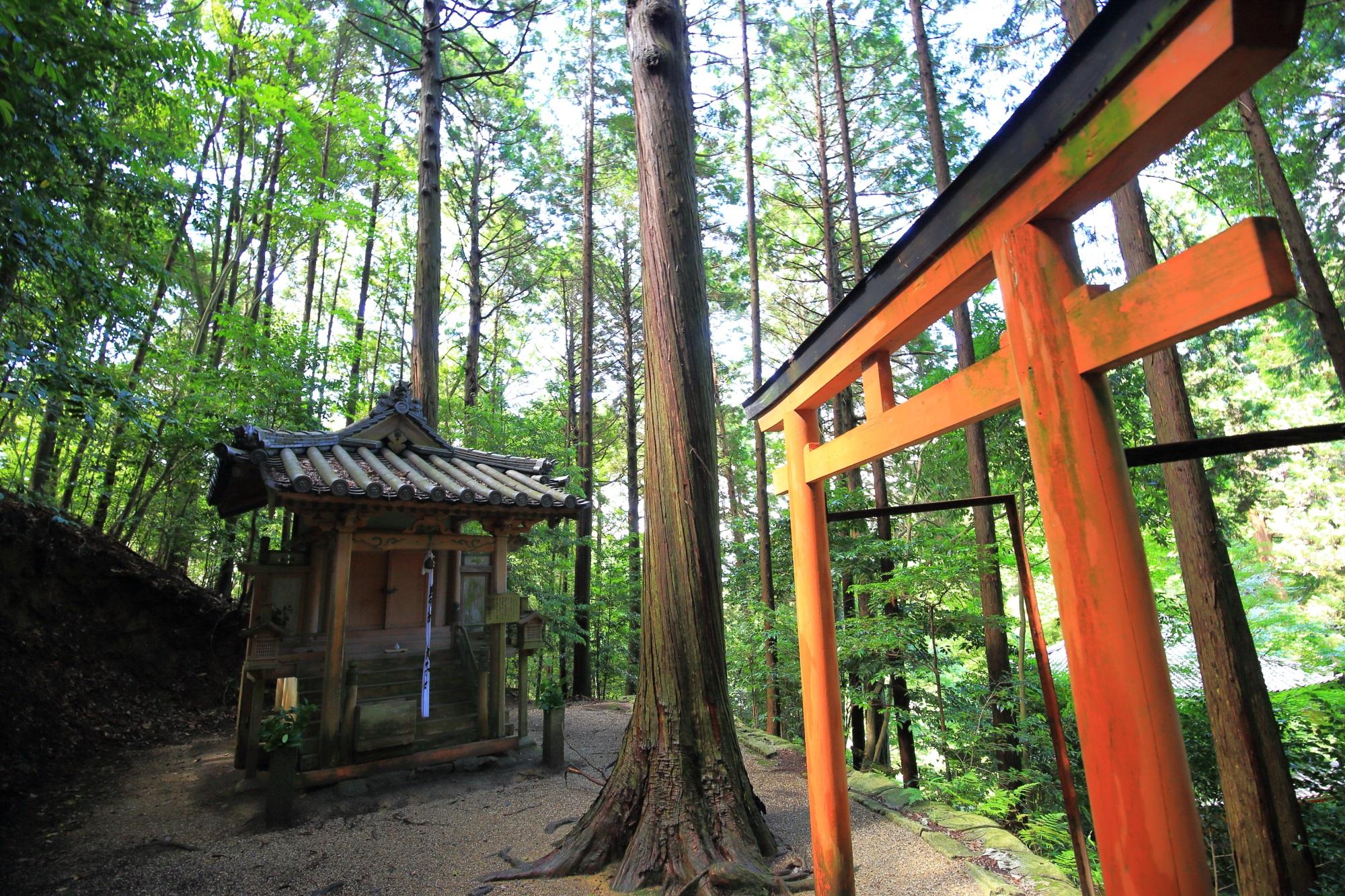 三重塔の横から斜面を登っていくとある岩船寺の歓喜天堂(聖天さん)