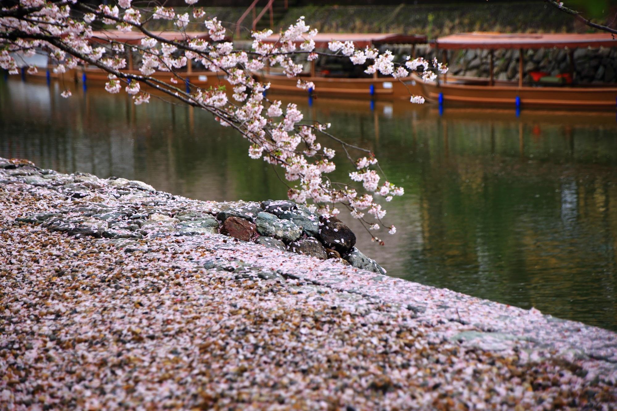 風情ある水辺を彩る桜のピンクの花びら