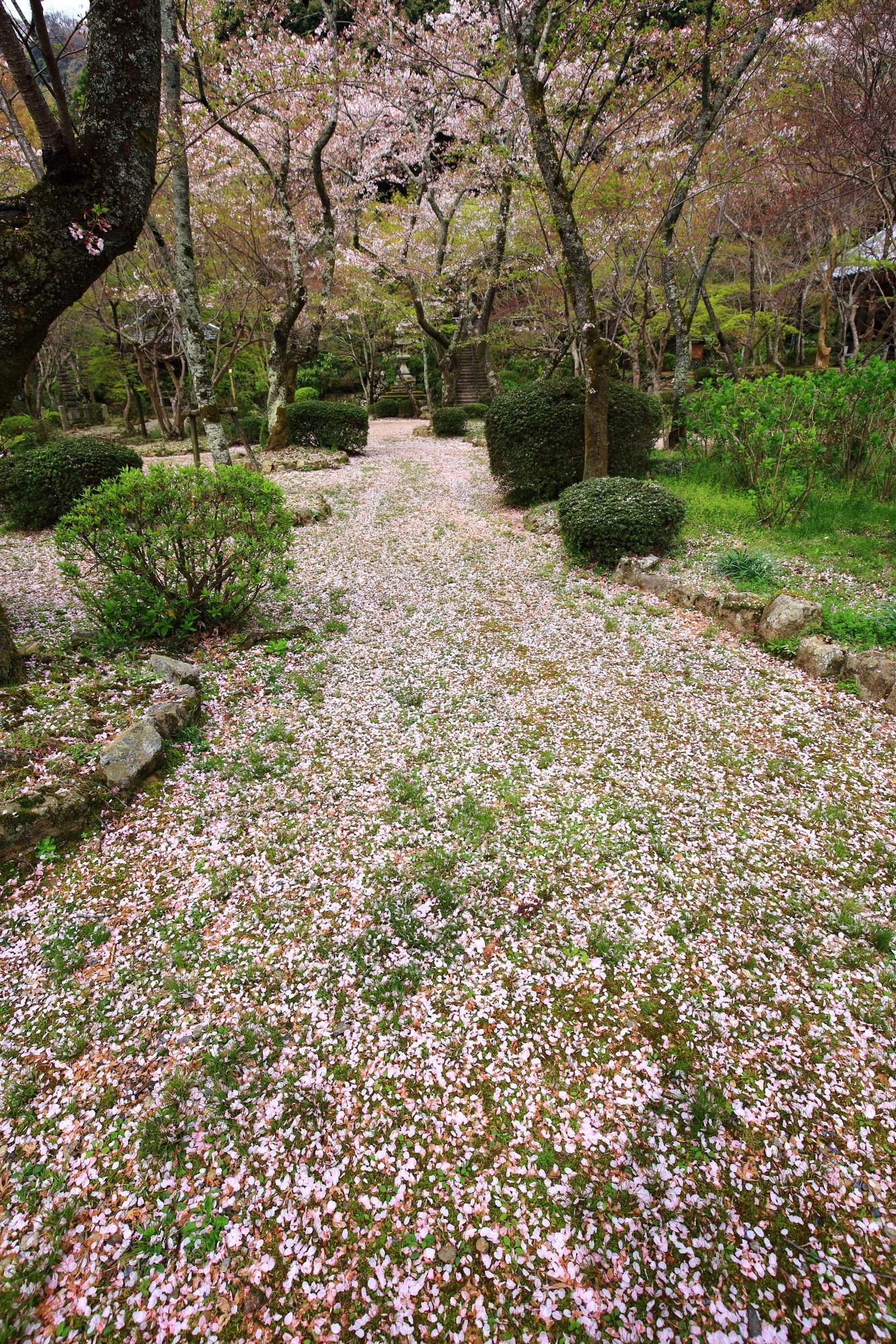 何か柔らかそうな一面の散り桜