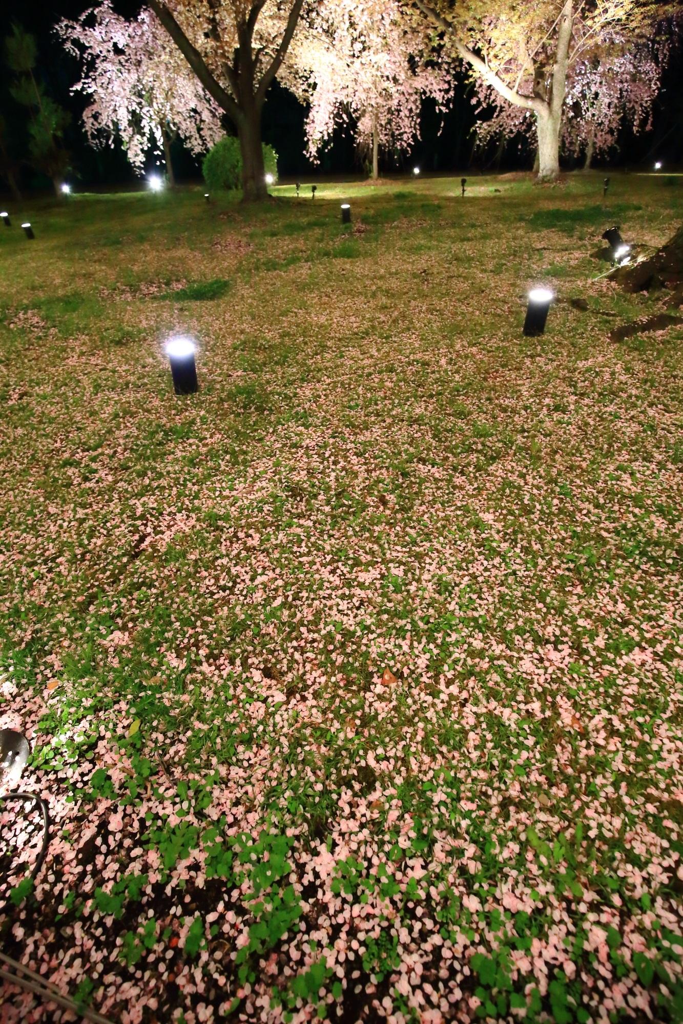 緑の芝生を覆う華やかなピンクの桜の絨毯