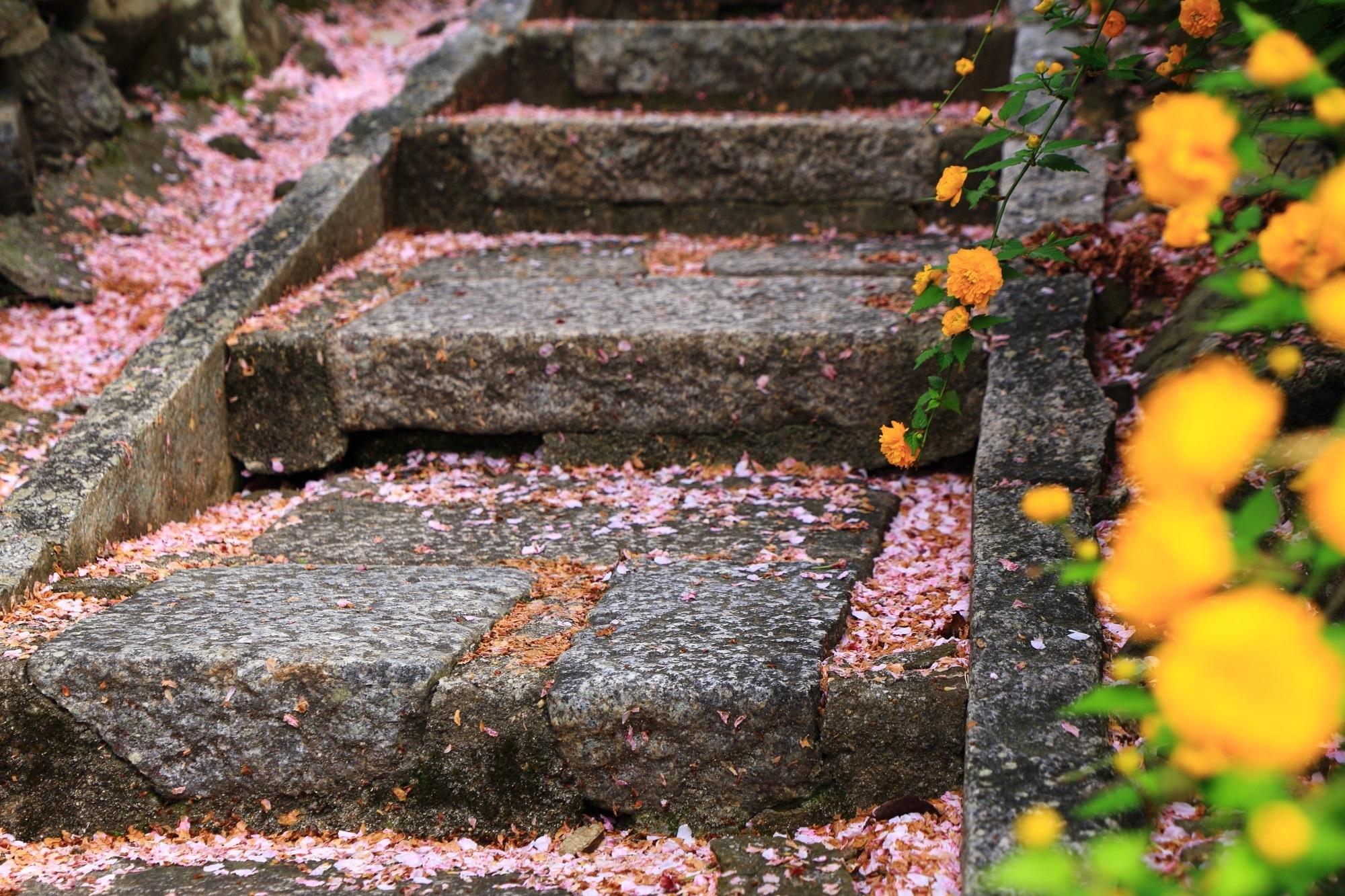 風情ある石段を彩る山吹と散り桜