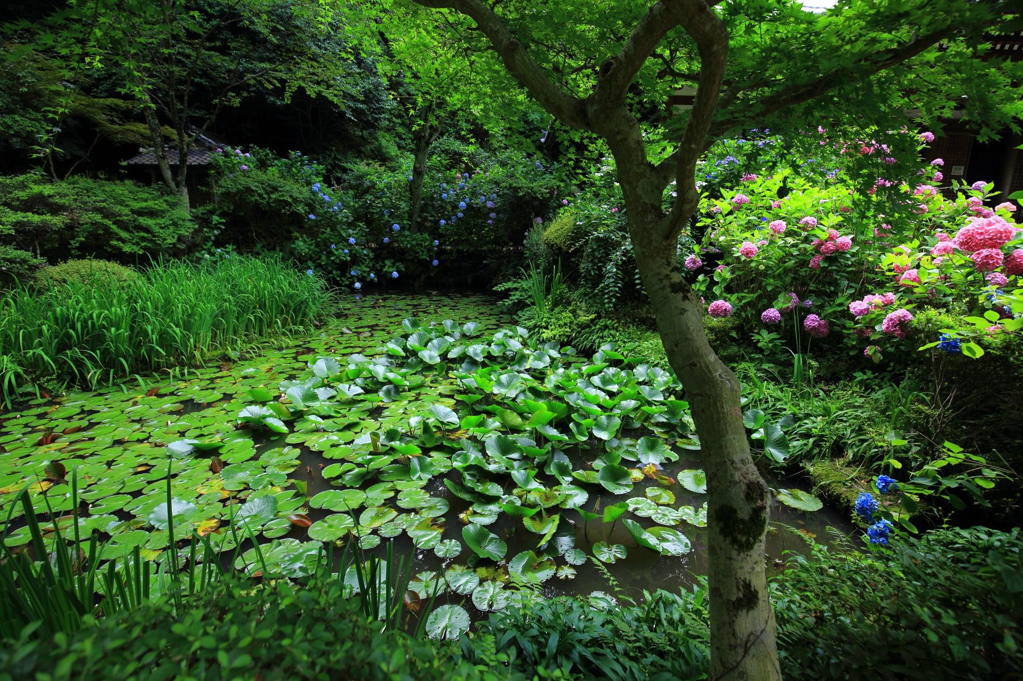本堂斜め向かいの三重塔前の緑の溢れる「阿字池」