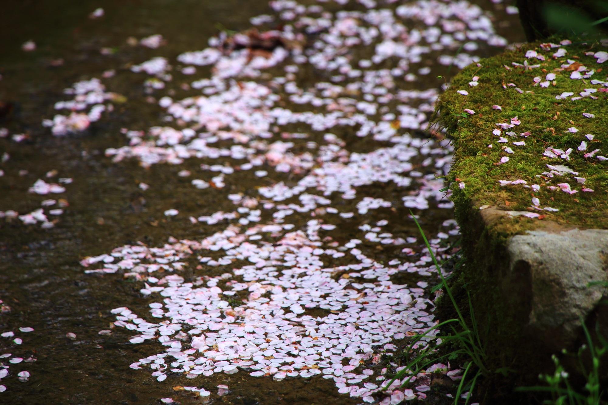 散ってからも美しい桜の花