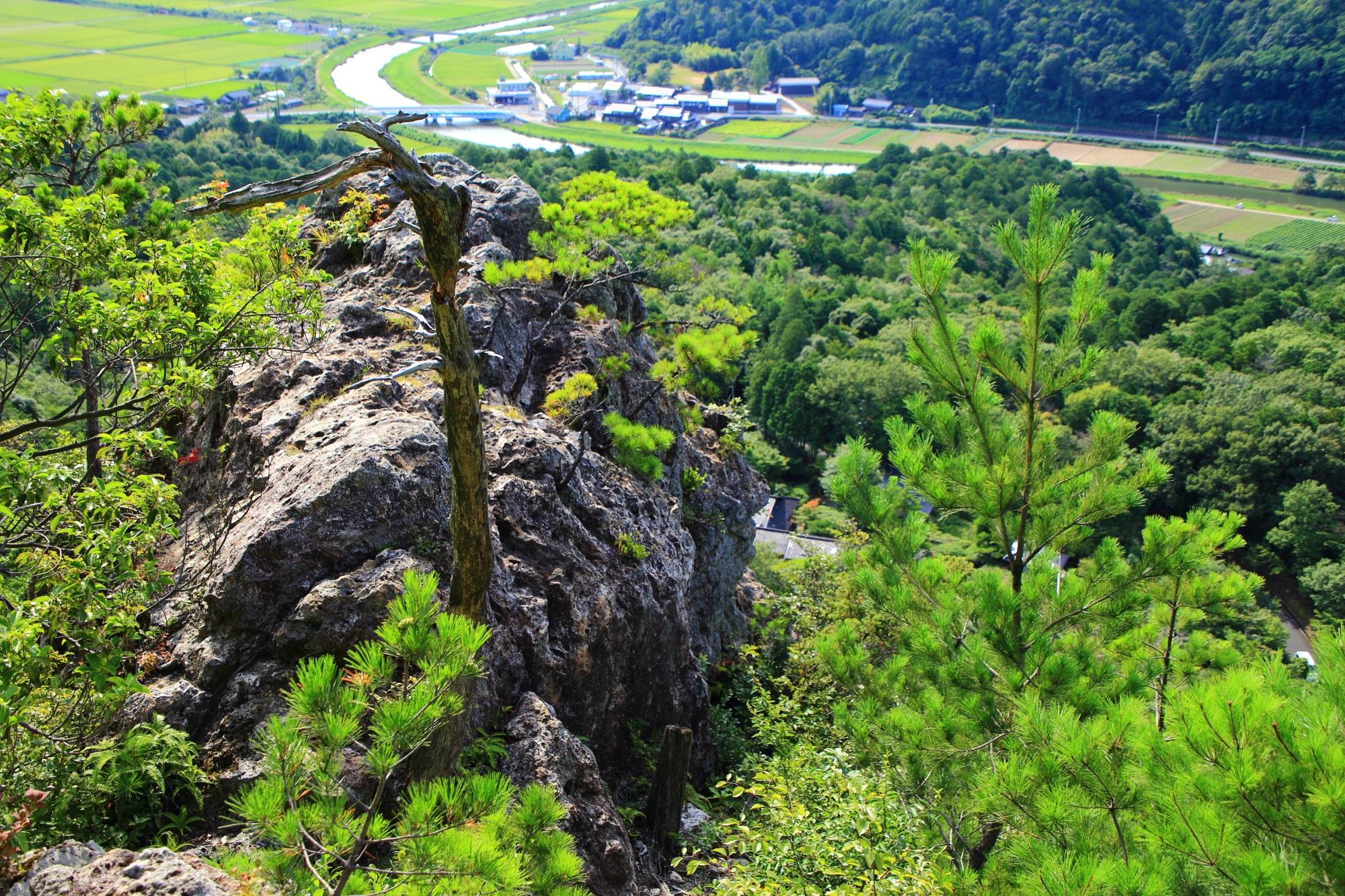 多種多様な植物や緑に覆われる人食い岩