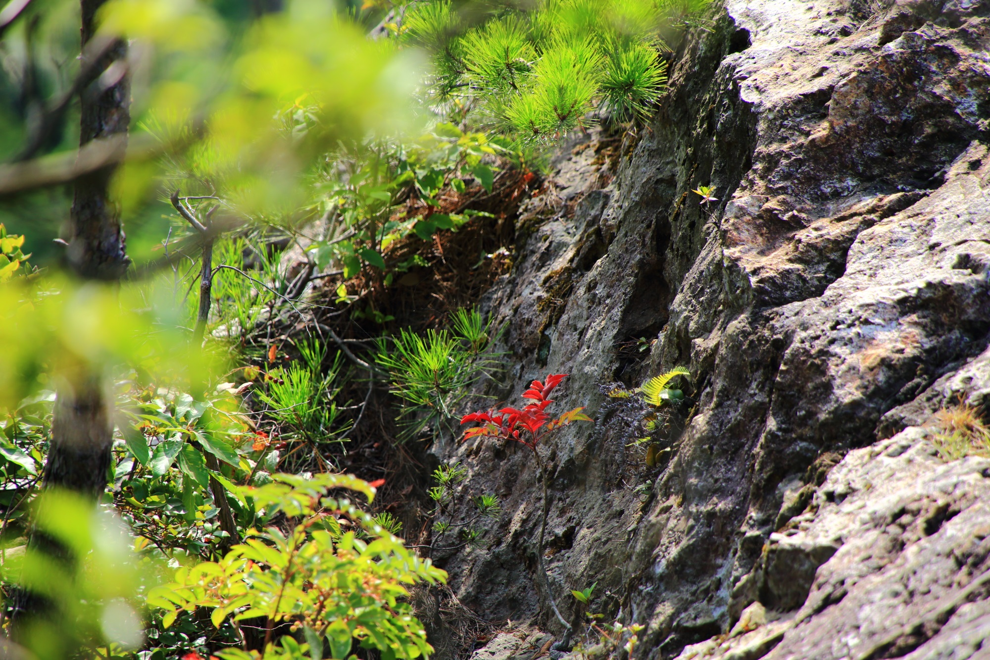 南天などの植物がいっぱい育ち強い生命力を感じる人食い岩