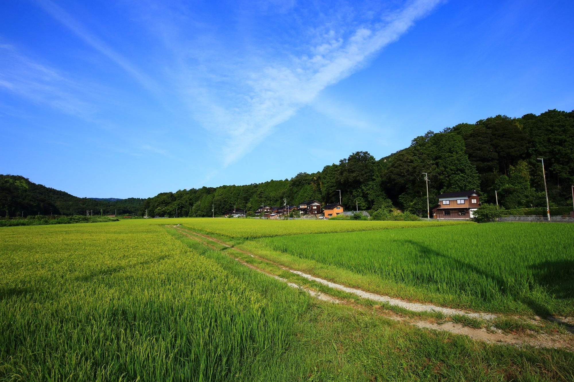 京丹後市久美浜町に広がる長閑な田園風景