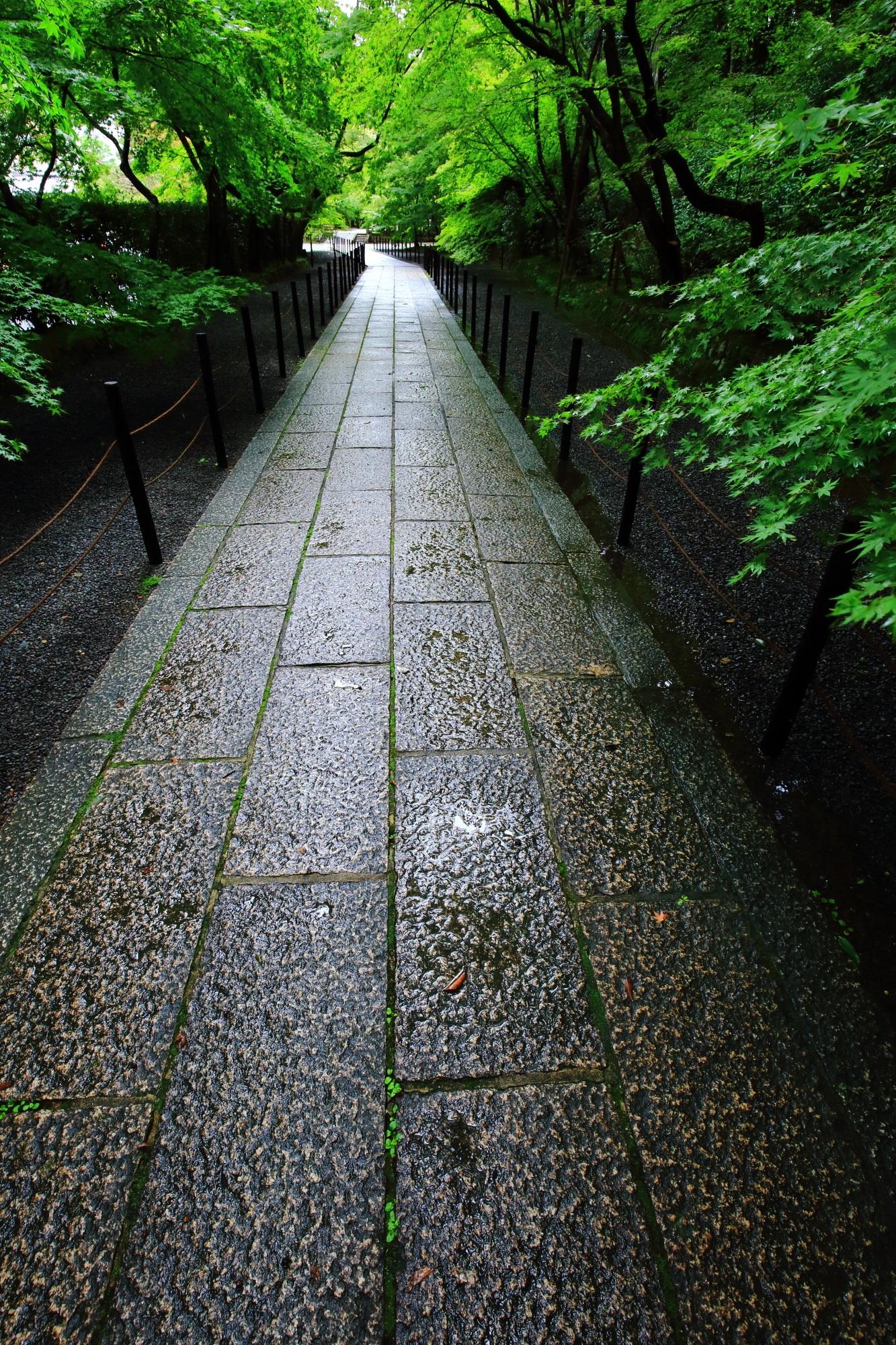 西山光明寺の雨に濡れた風情あるモミジ参道