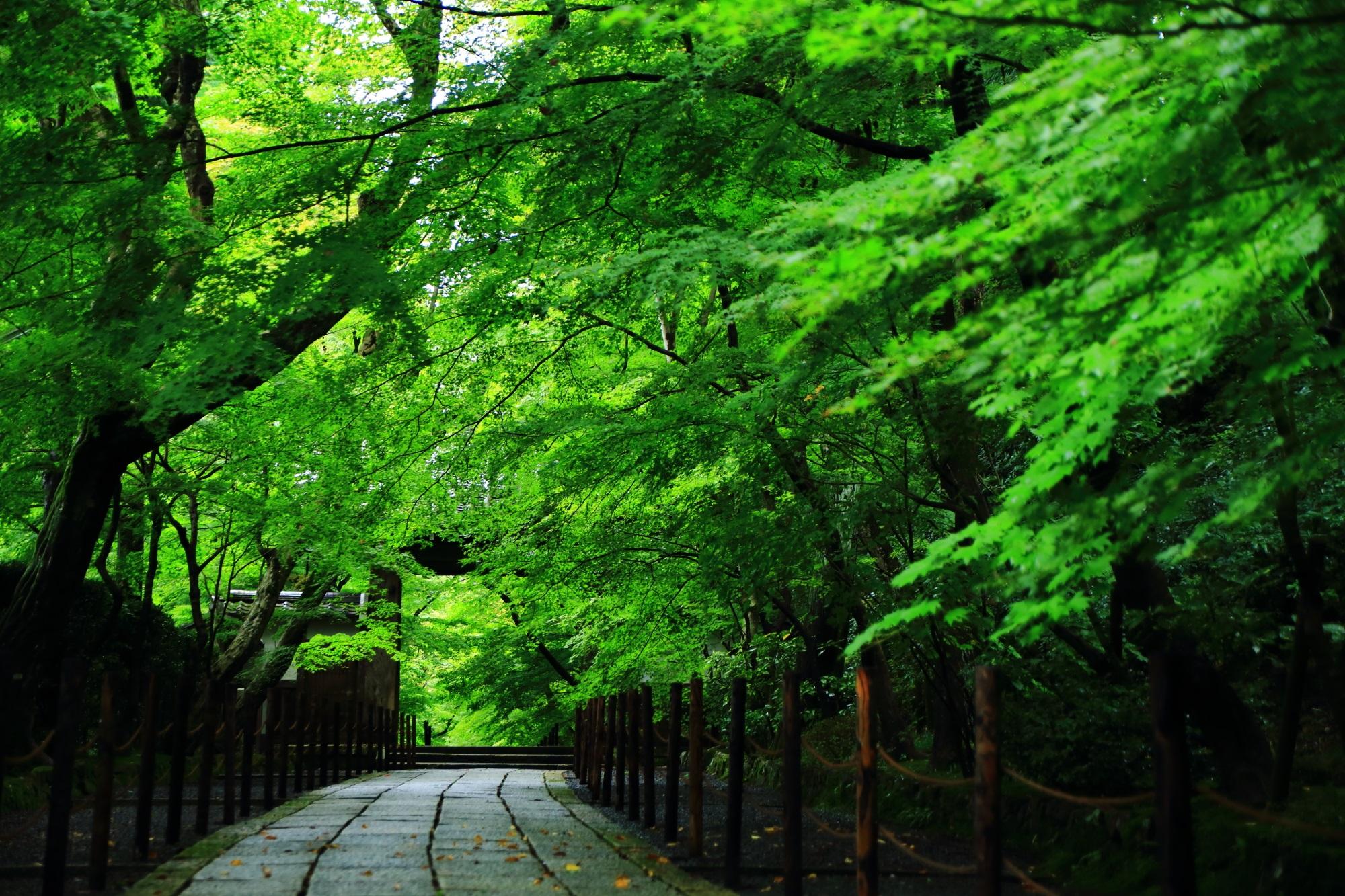 鮮やかな緑の青もみじにつつまれた長岡の光明寺(こうみょうじ)