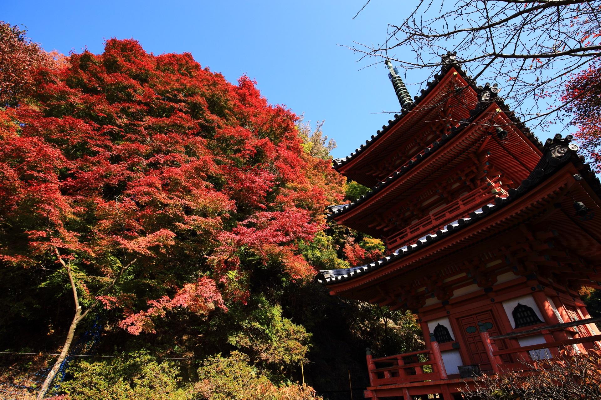 三室戸寺の三重塔と紅葉