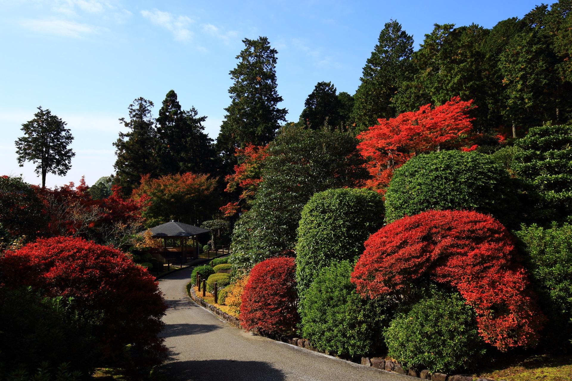三室戸寺のツツジの紅葉