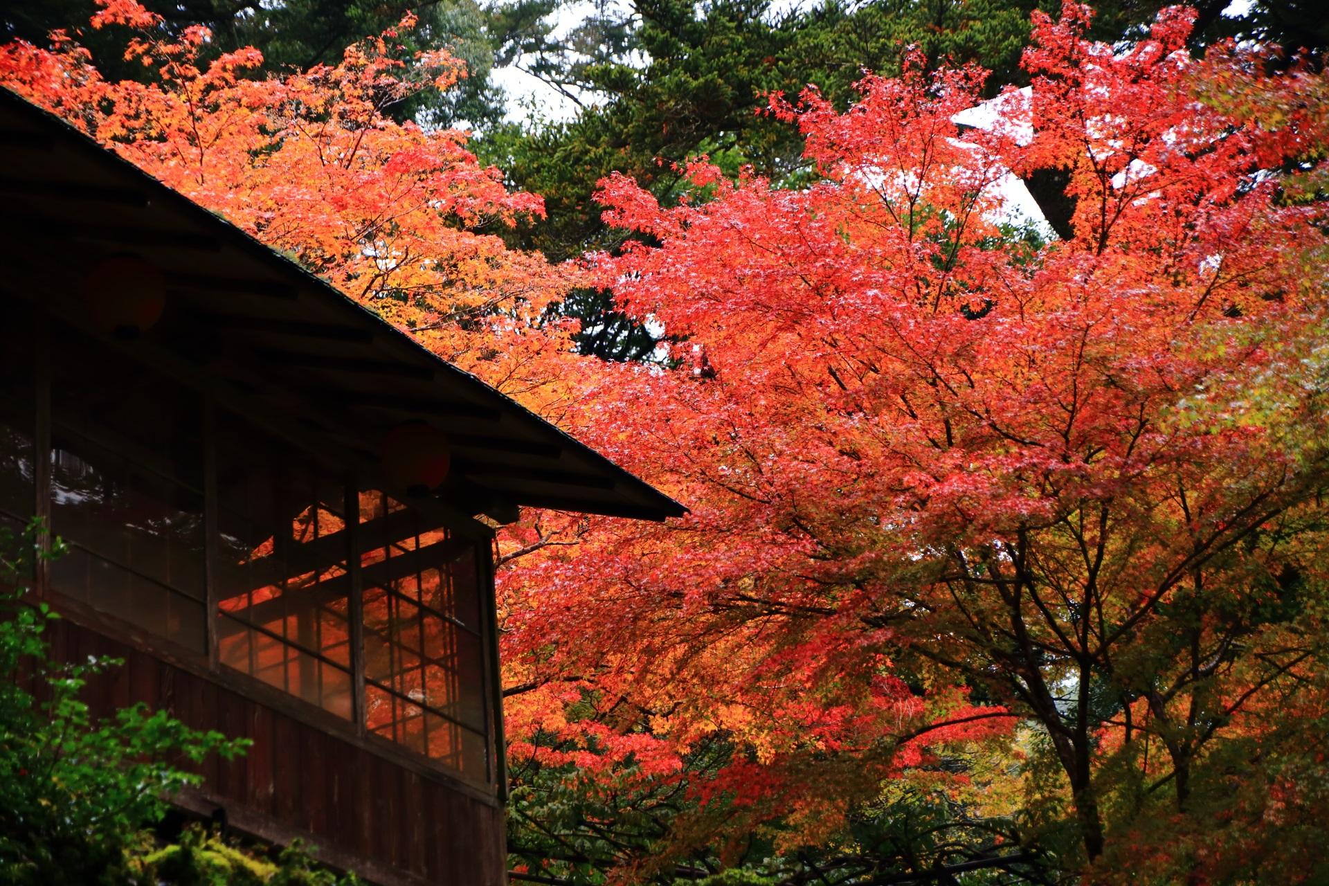 神護寺の長い参道脇のお店の溢れる華やかな紅葉
