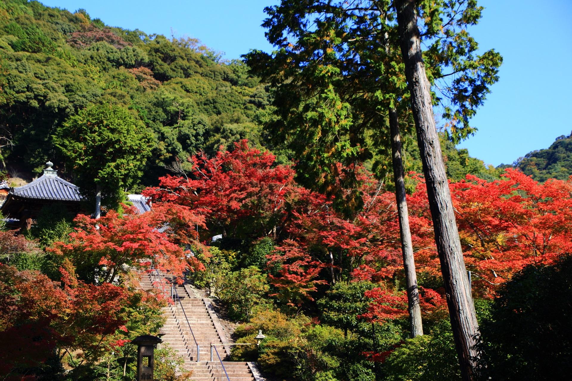 三室戸寺の本堂に続く石段の紅葉