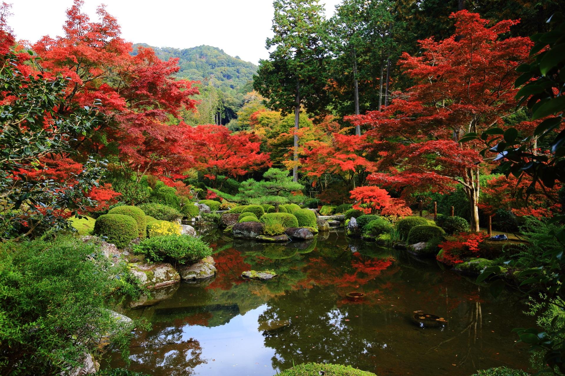 三室戸寺の素晴らしい紅葉と多彩な秋の情景