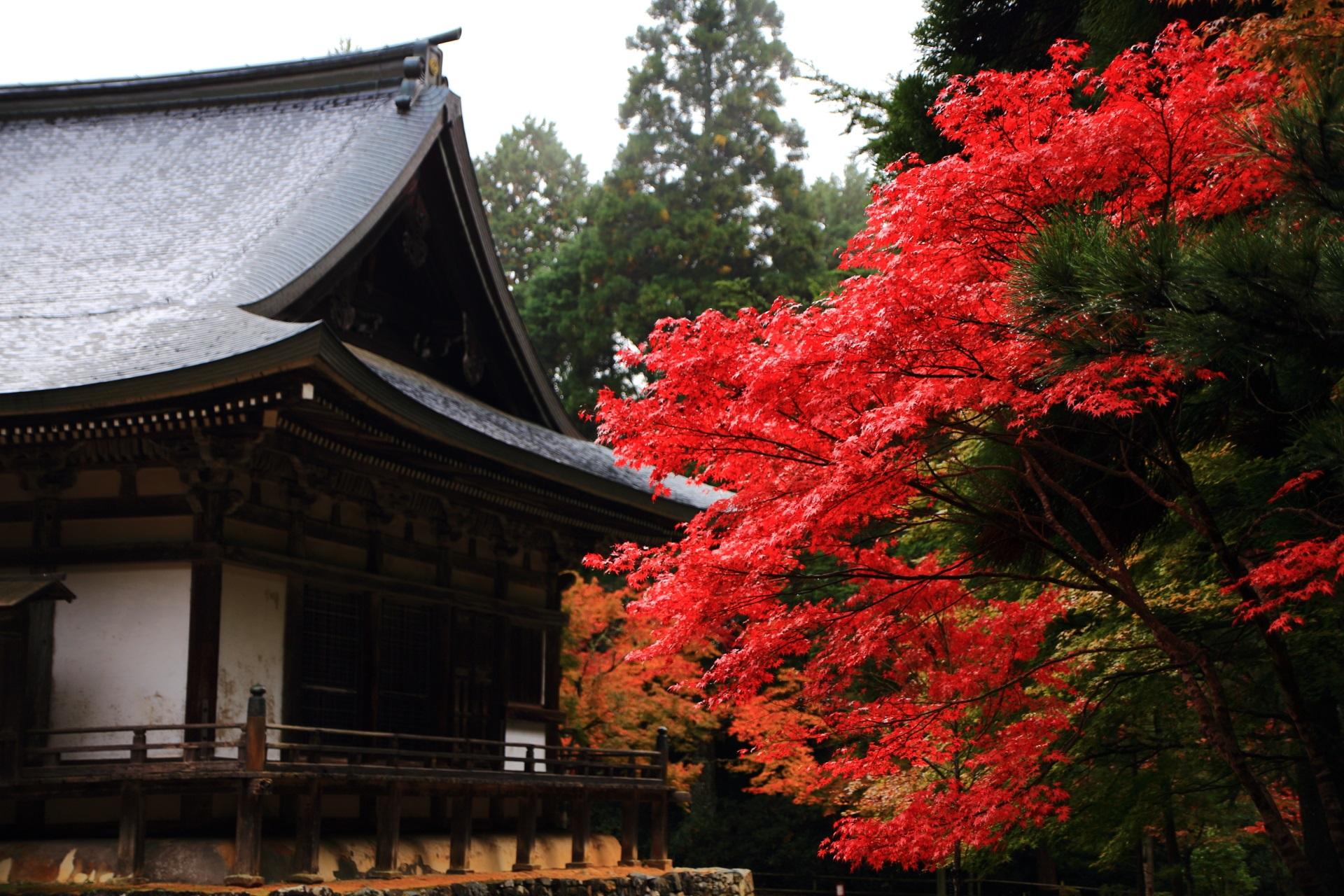 神護寺の五大堂と紅葉
