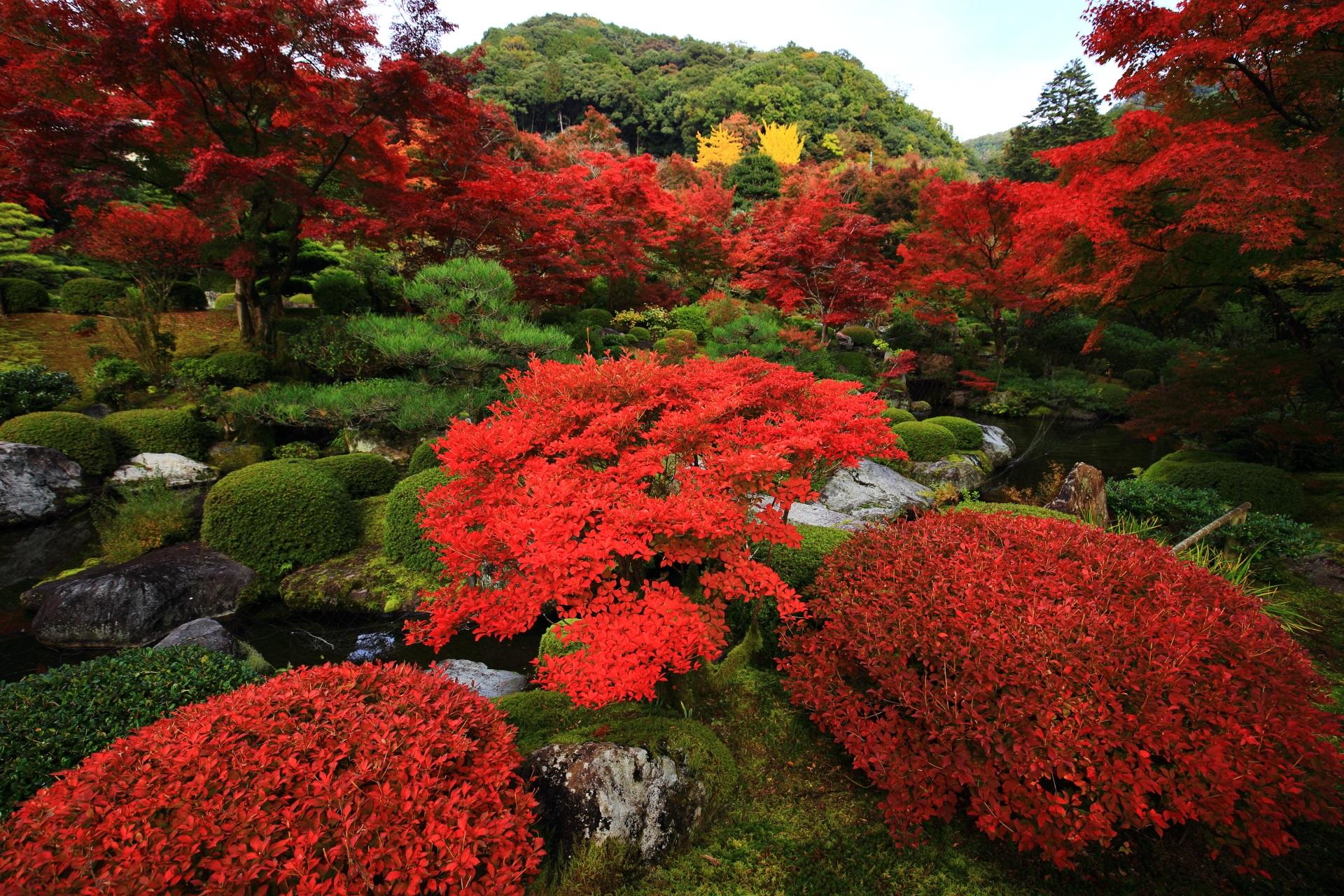三室戸寺の与楽苑の多種多様な溢れる秋の赤色