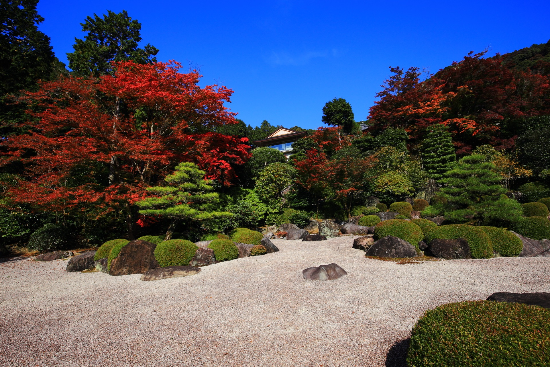 三室戸寺の風情ある庭園の豪快な紅葉