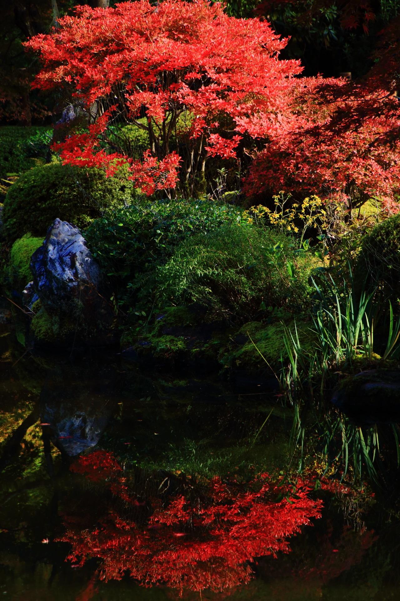 三室戸寺のツツジの紅葉の水鏡
