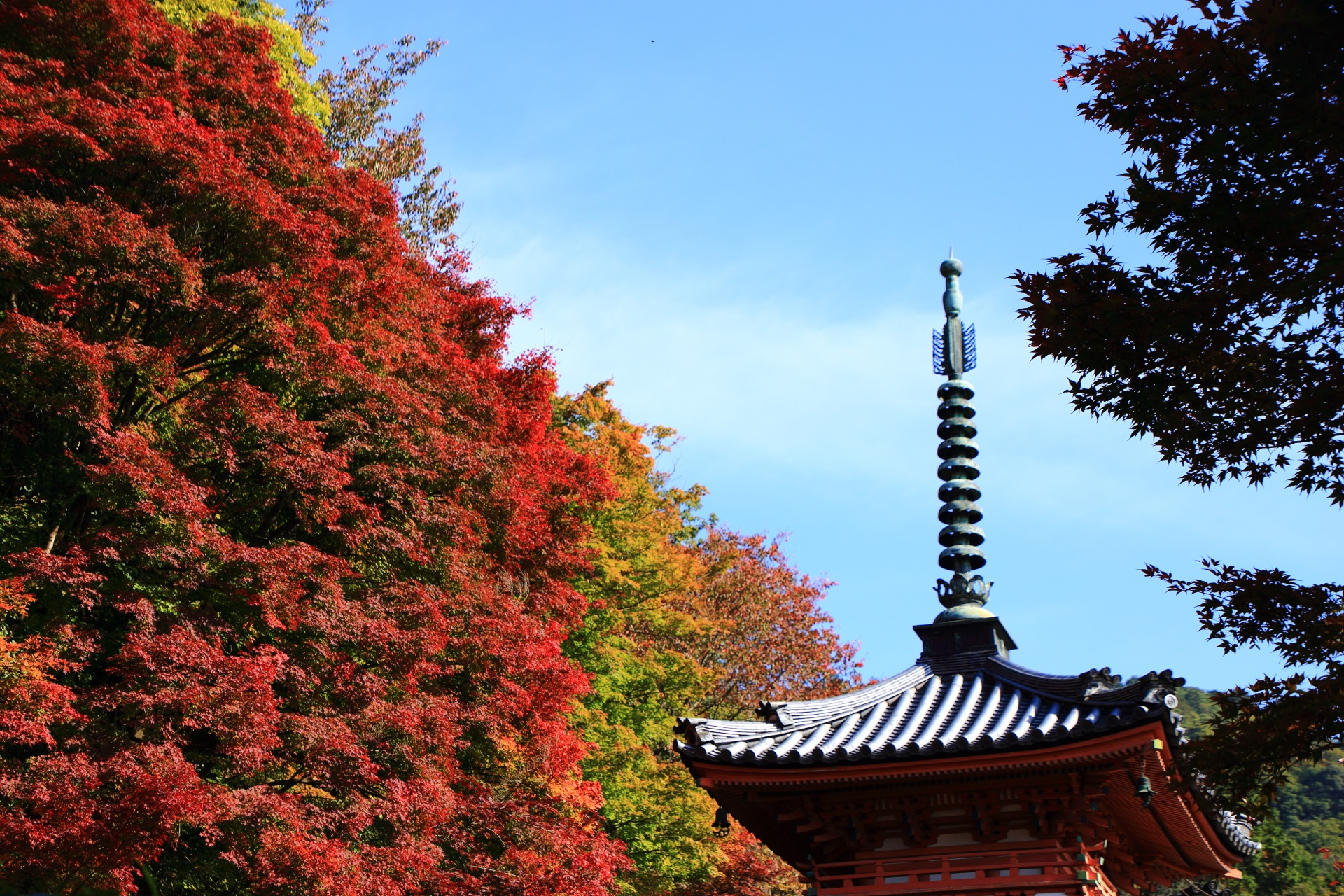 朱色の三重塔を染める鮮やかな赤い紅葉