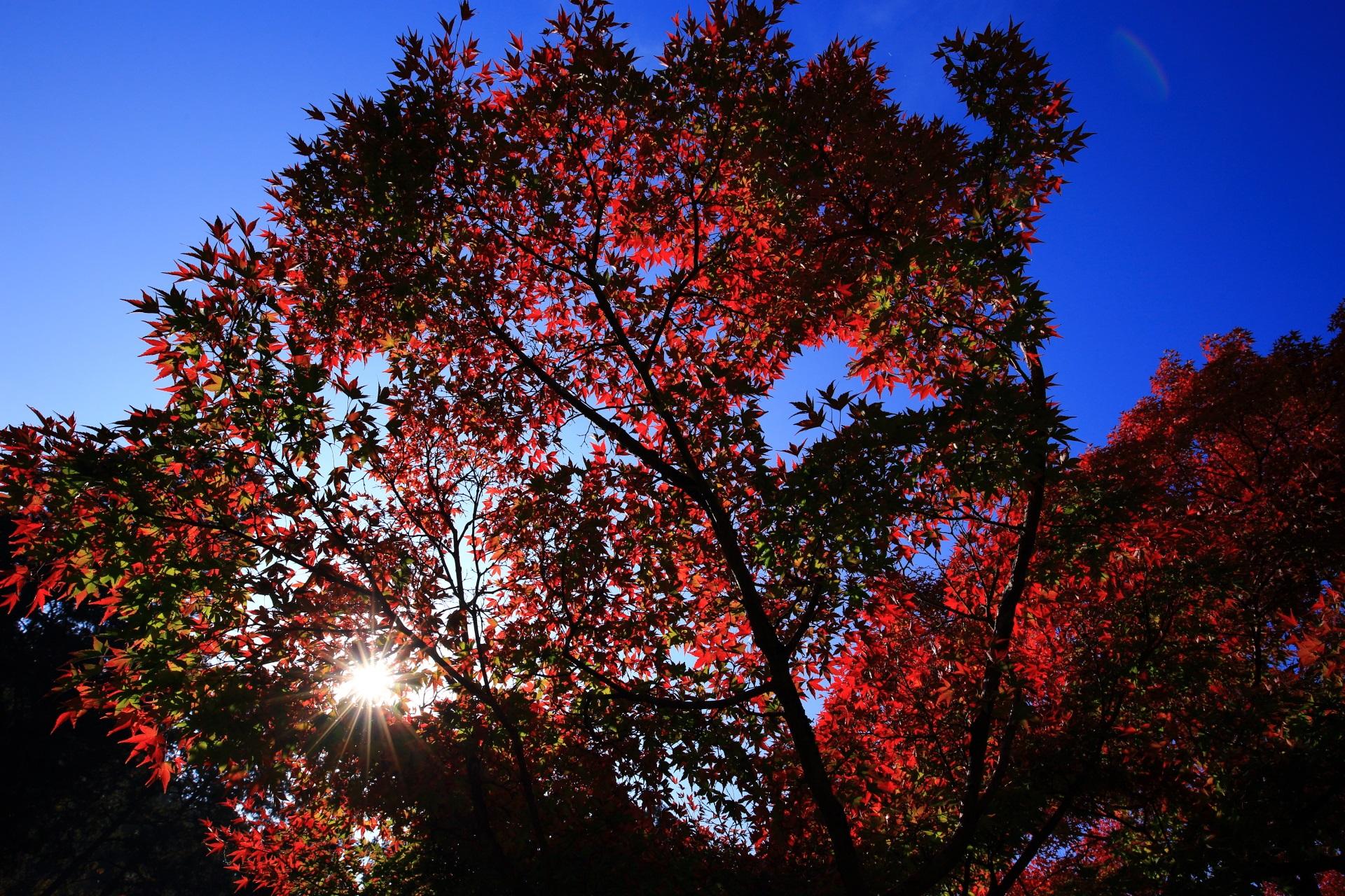 色づく紅葉と太陽とシルエット