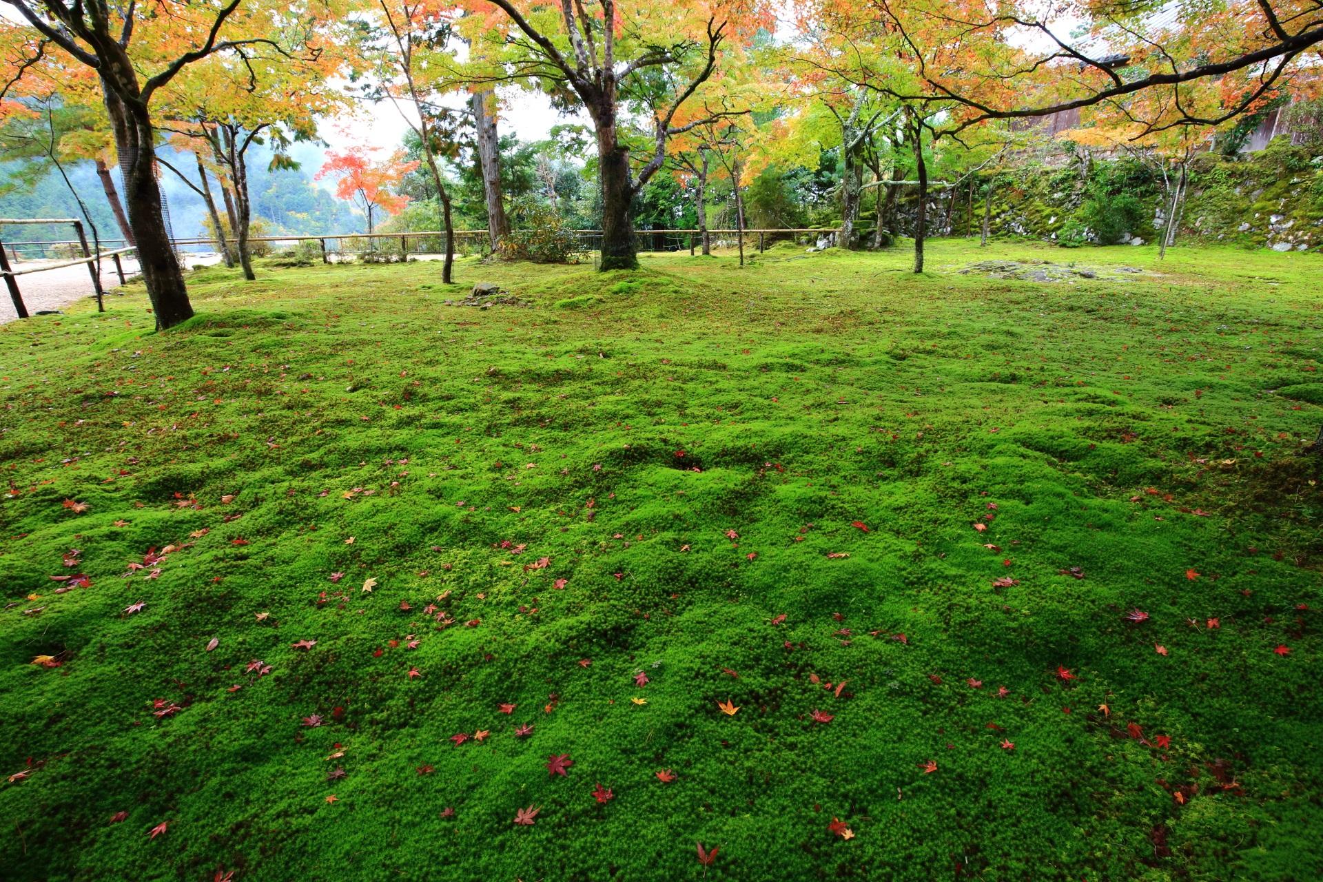 錦雲渓手前の苔庭と上品な散り紅葉