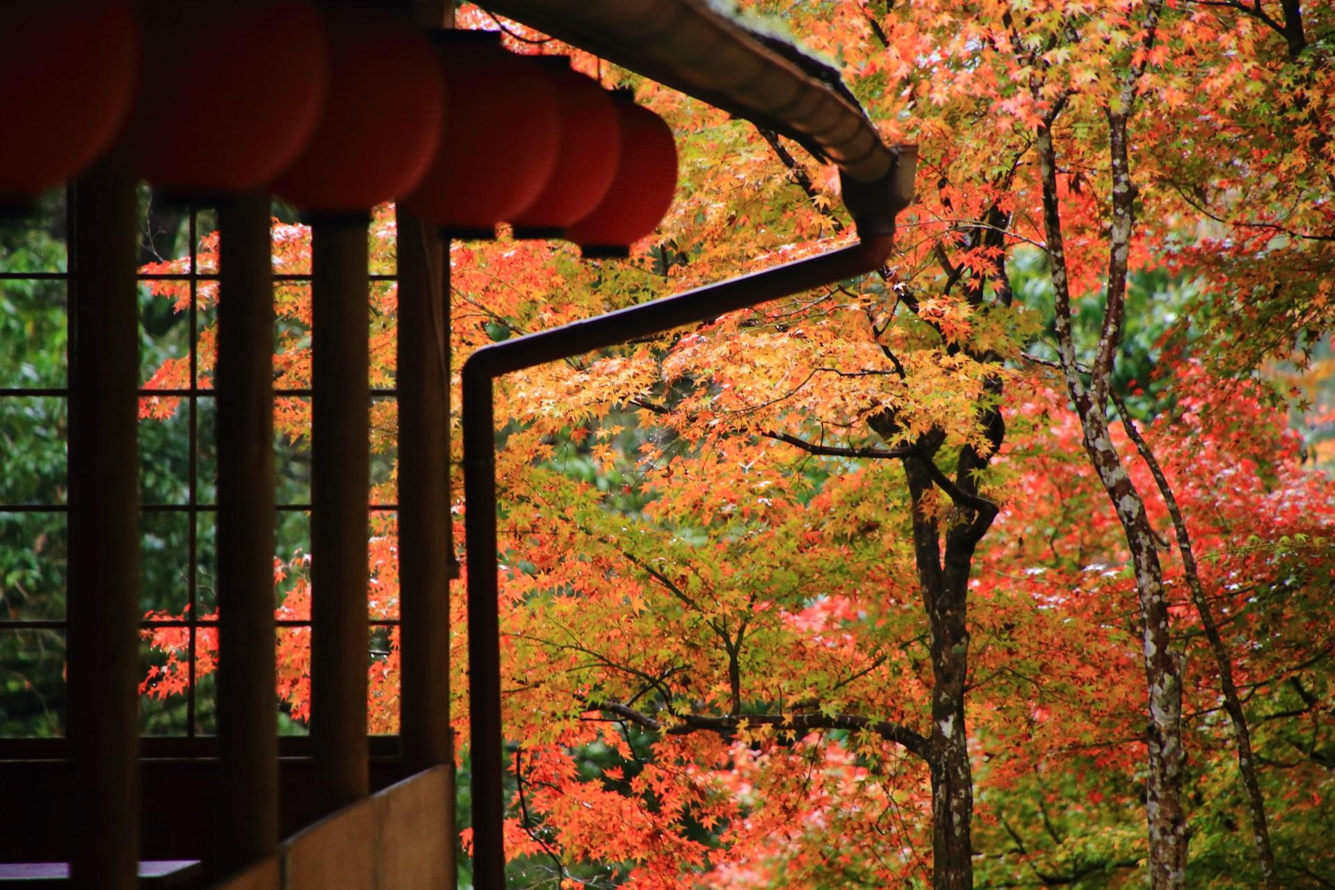 神護寺参道の風情ある秋の情景