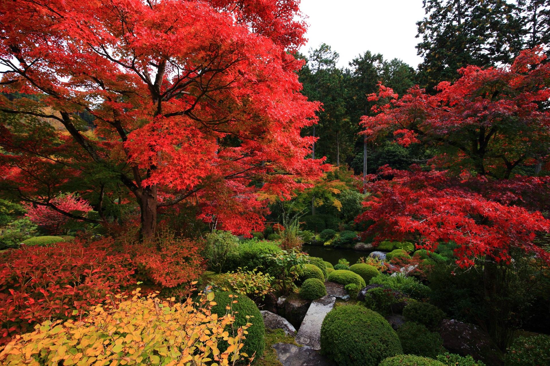 三室戸寺の池泉回遊式庭園の美しい緑の中で溢れる赤い紅葉