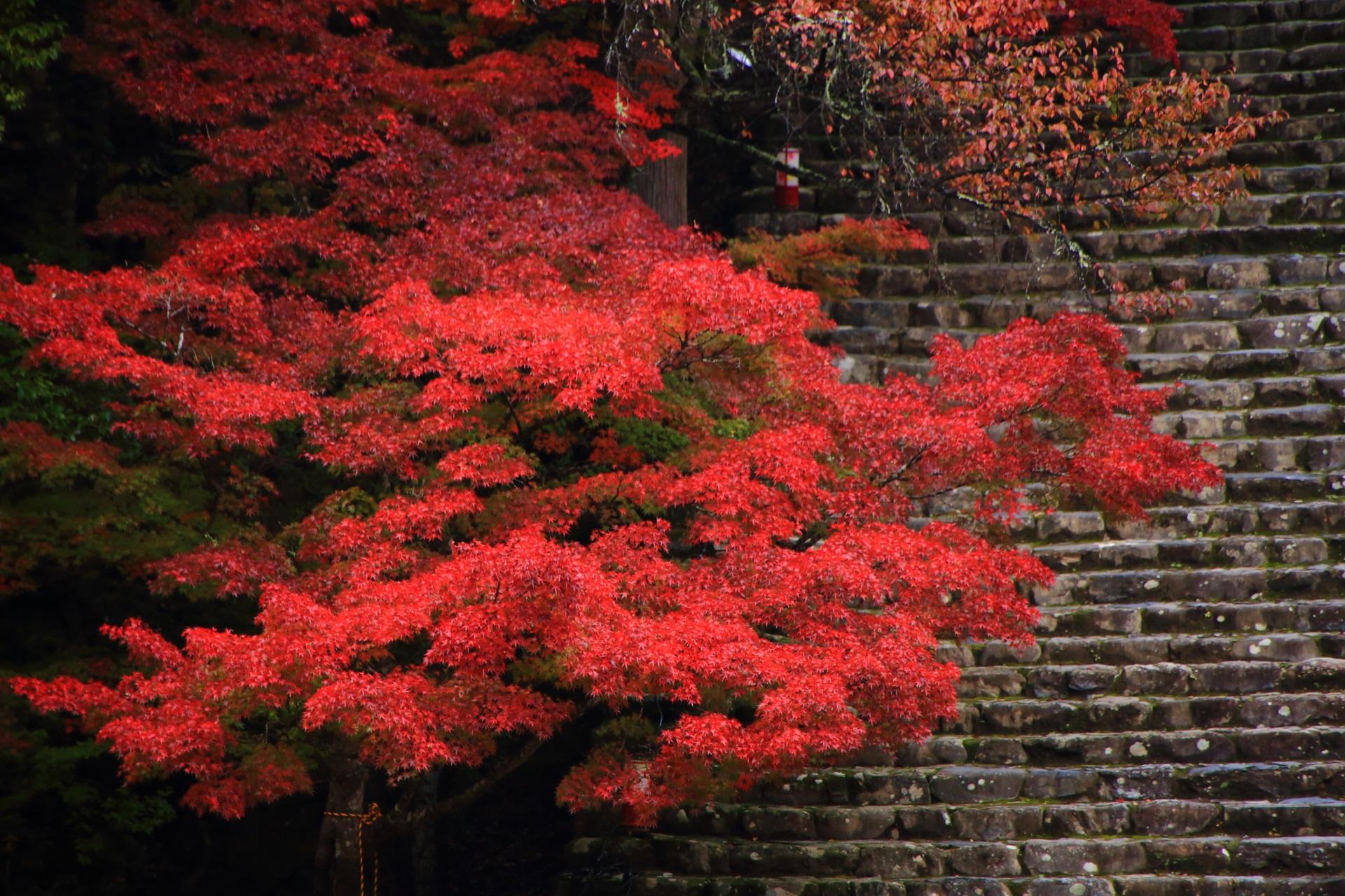 神護寺 高画質 紅葉 画像