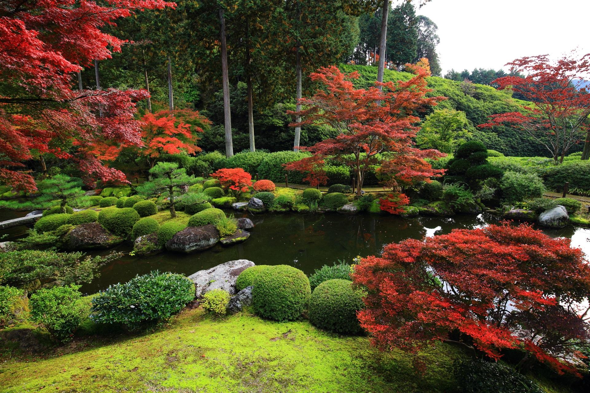 与楽苑 よらくえん 三室戸寺 庭園 紅葉
